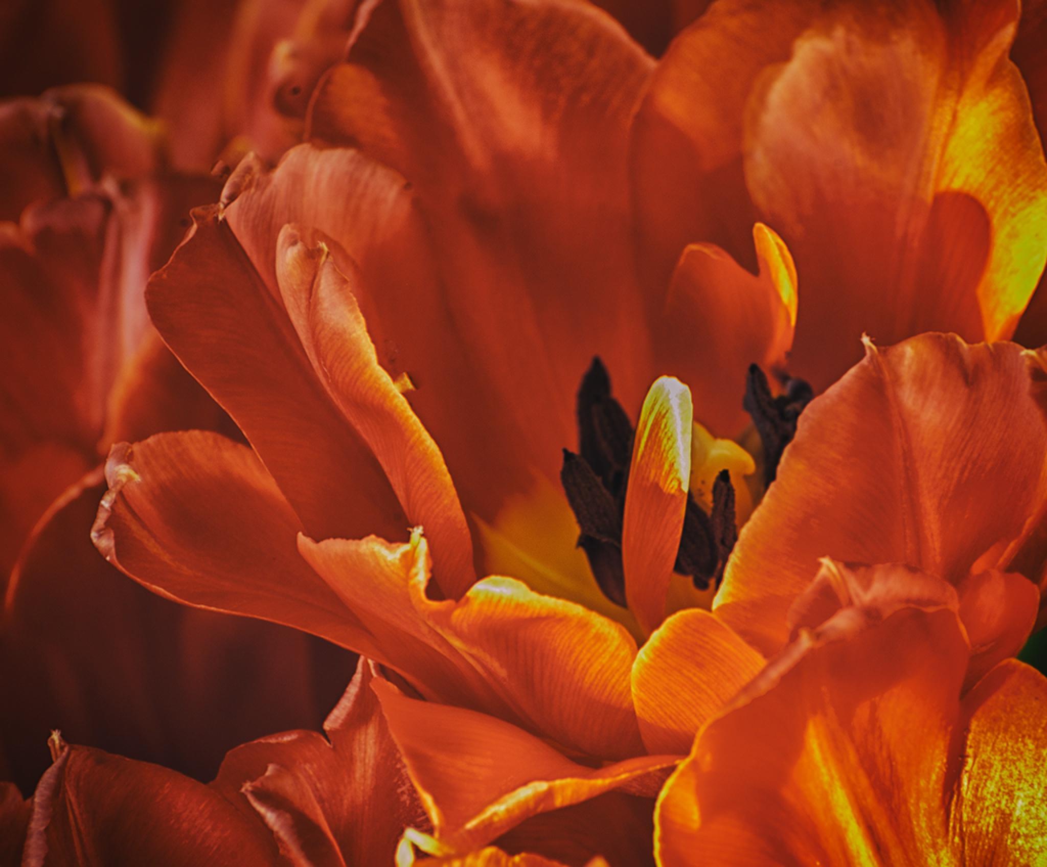 Flower by MargaretaG