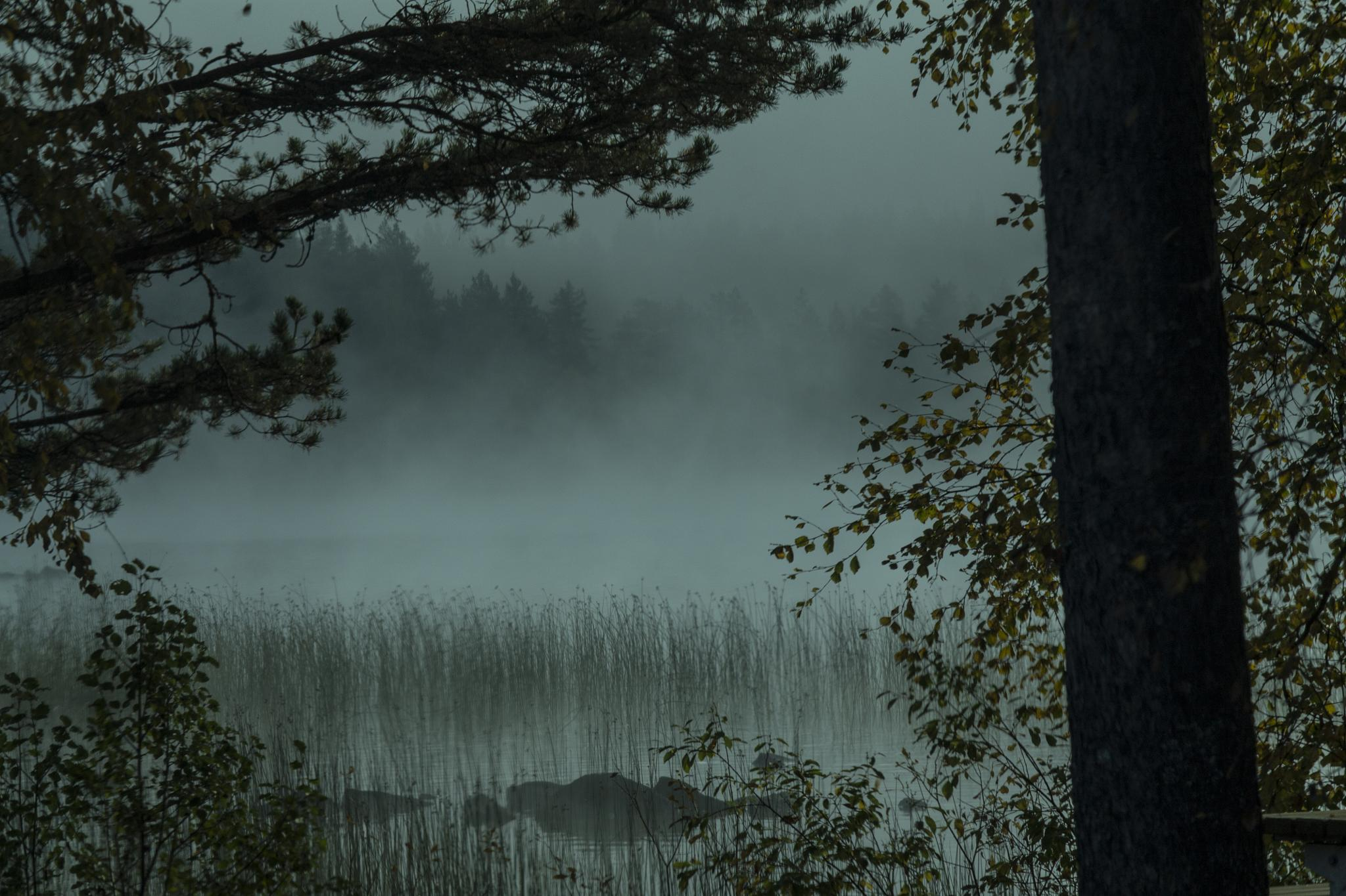 Morning mist over the lake by Carl Hult