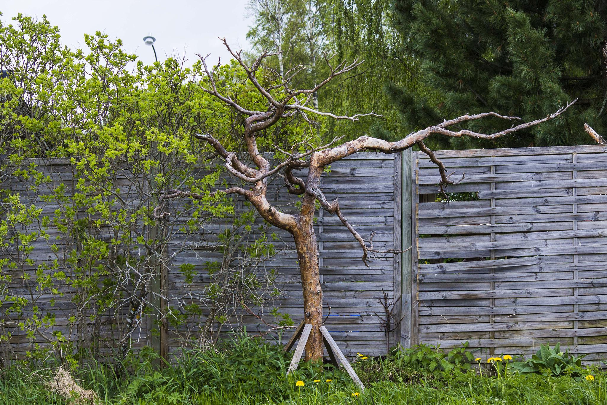 Tree as art by Carl Hult