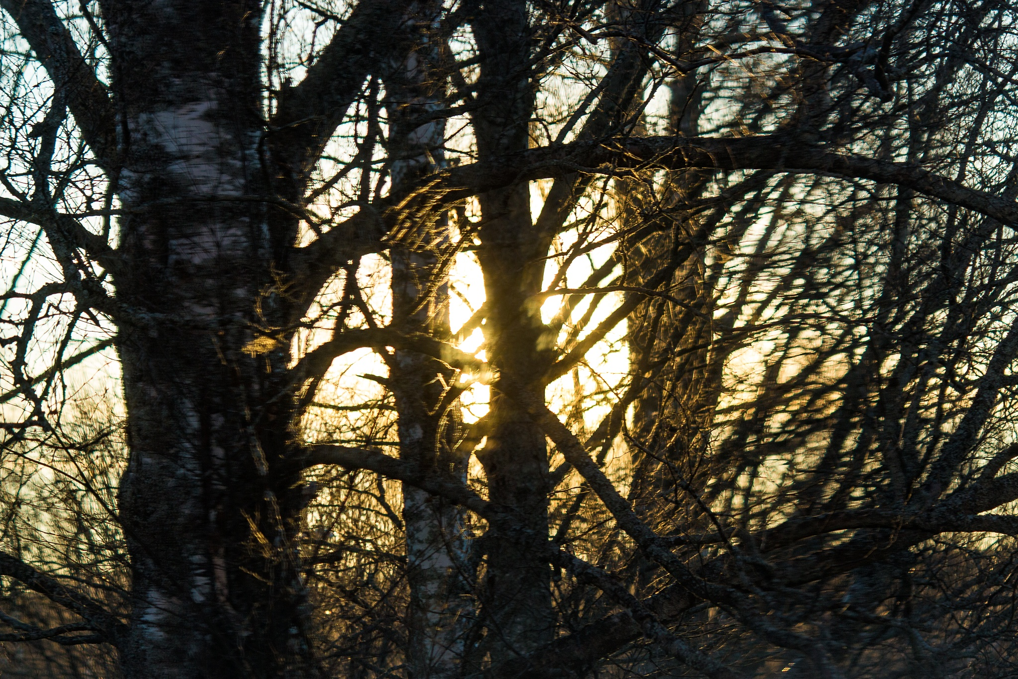 Sun branches by Carl Hult