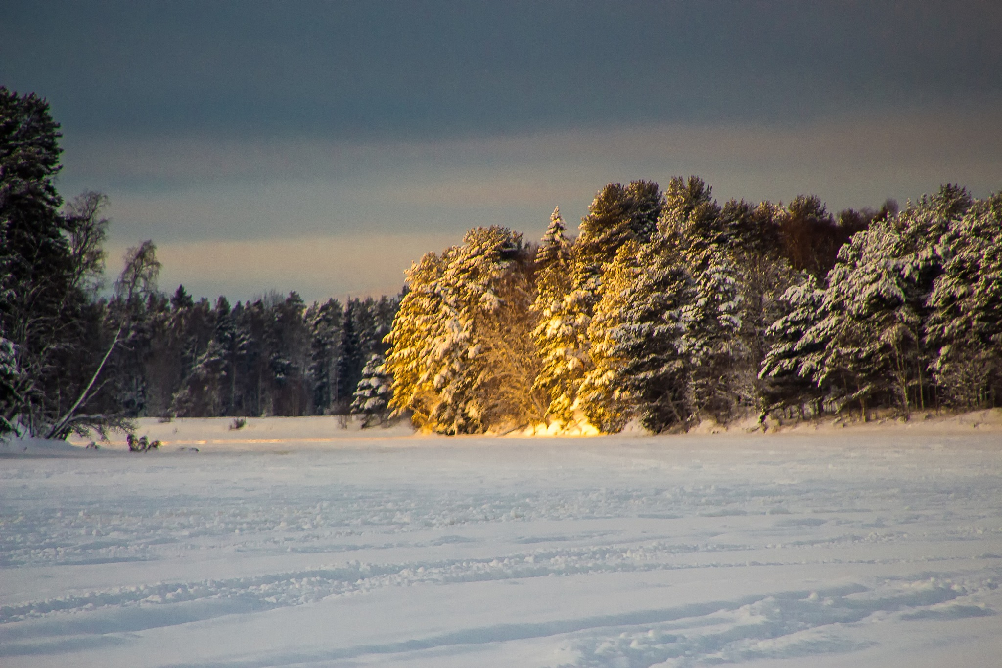 Sunshine on the winter trees by Carl Hult