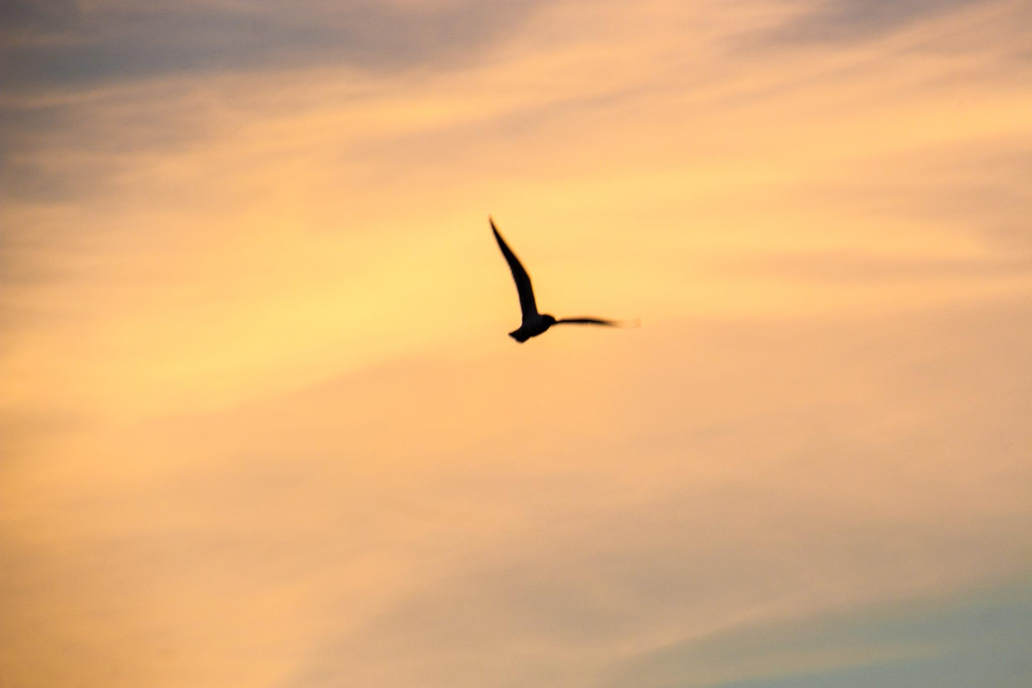 Wings of tomorrow by Carl Hult