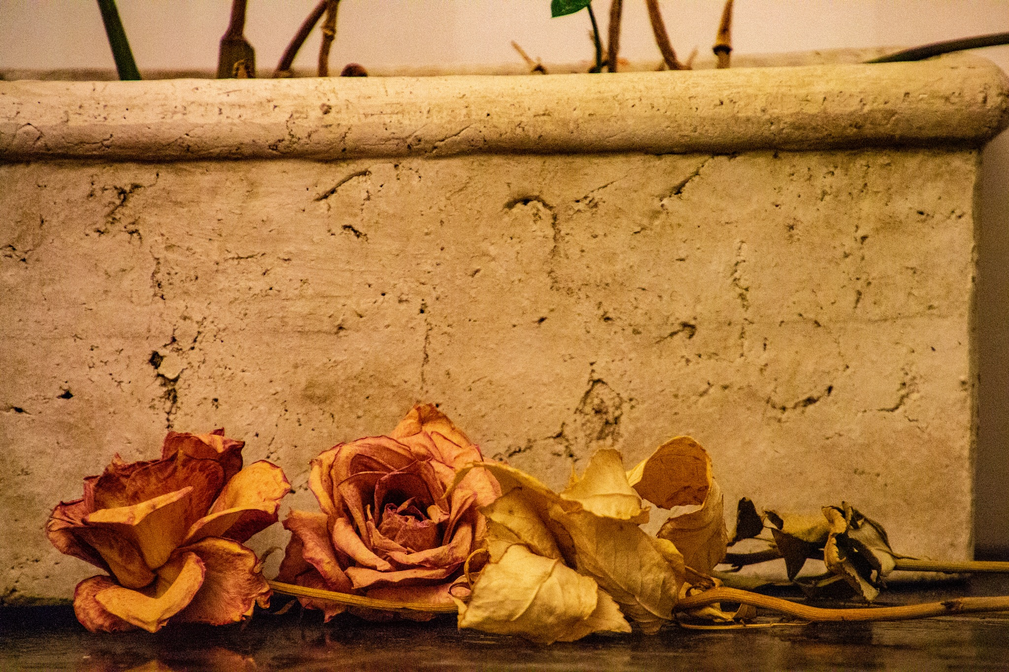 Withering roses by Carl Hult