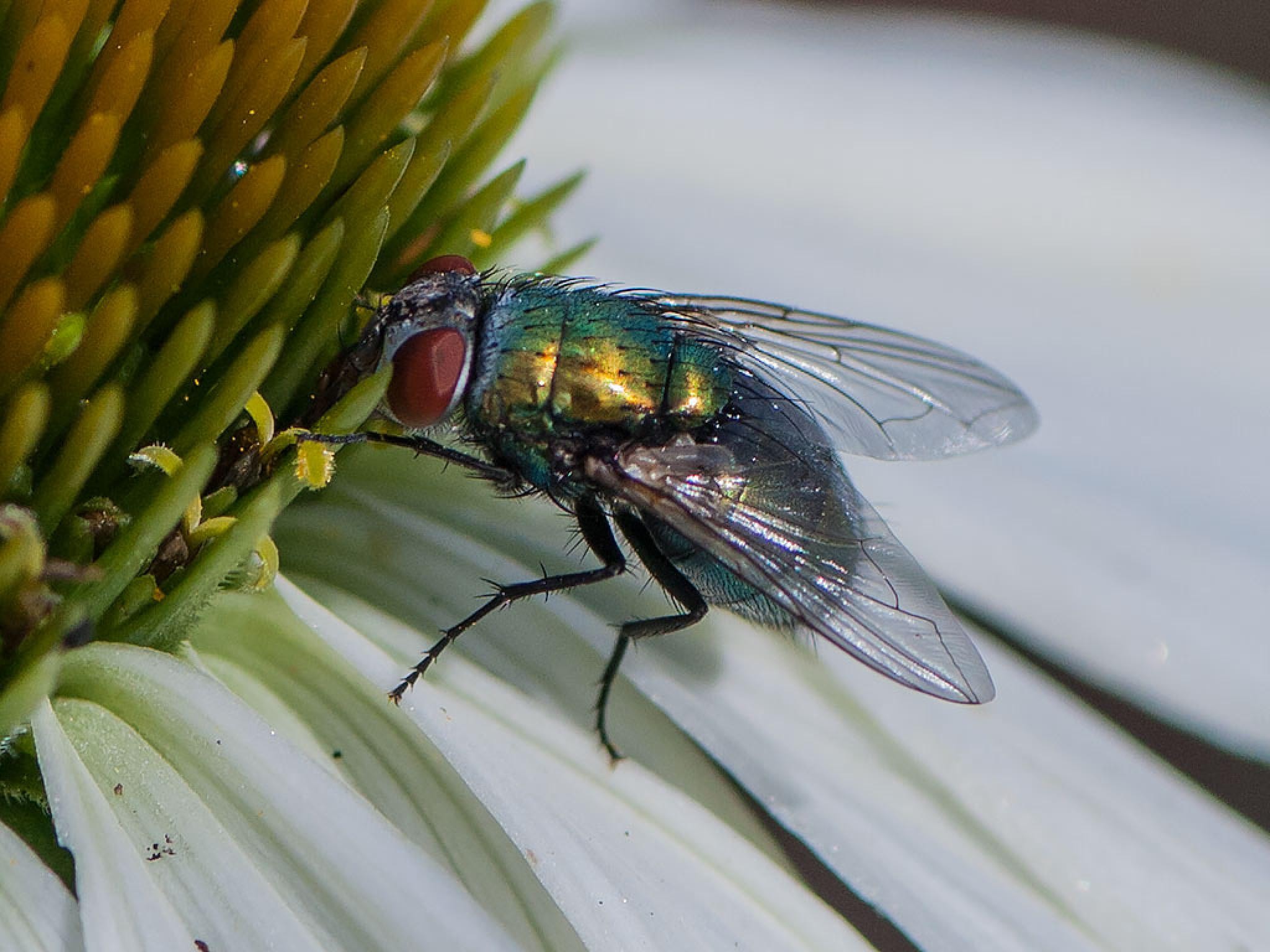 Fly On A Flower by linda.smith.754365