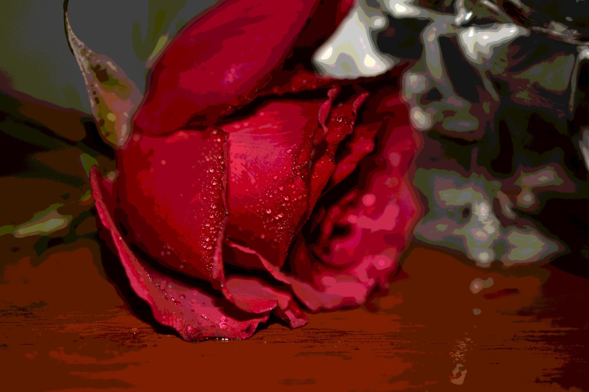 red rose4 by pgavin5000