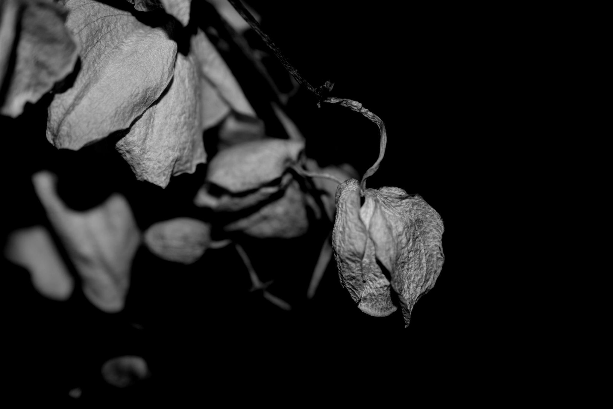 dead orchid by pgavin5000