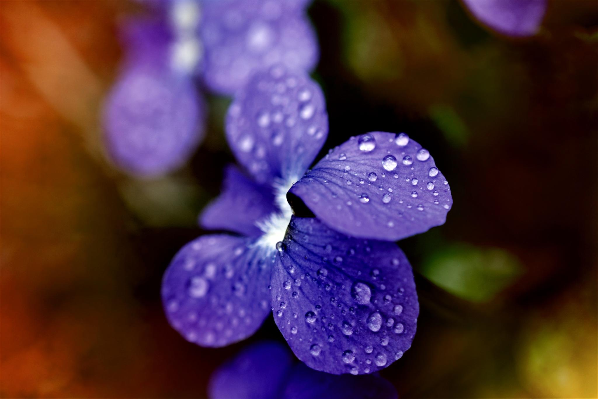 purple wild flower by pgavin5000