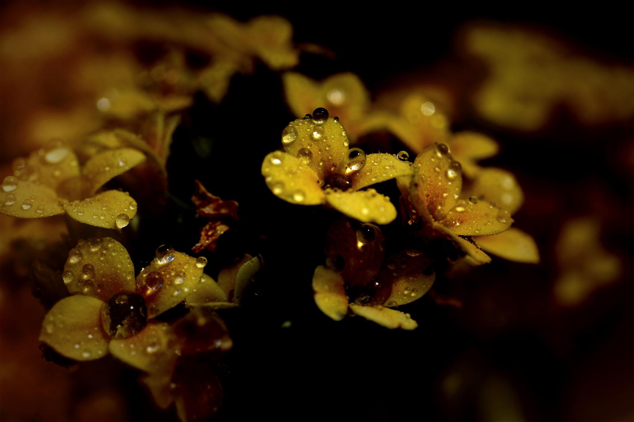 wildflower 002 by pgavin5000