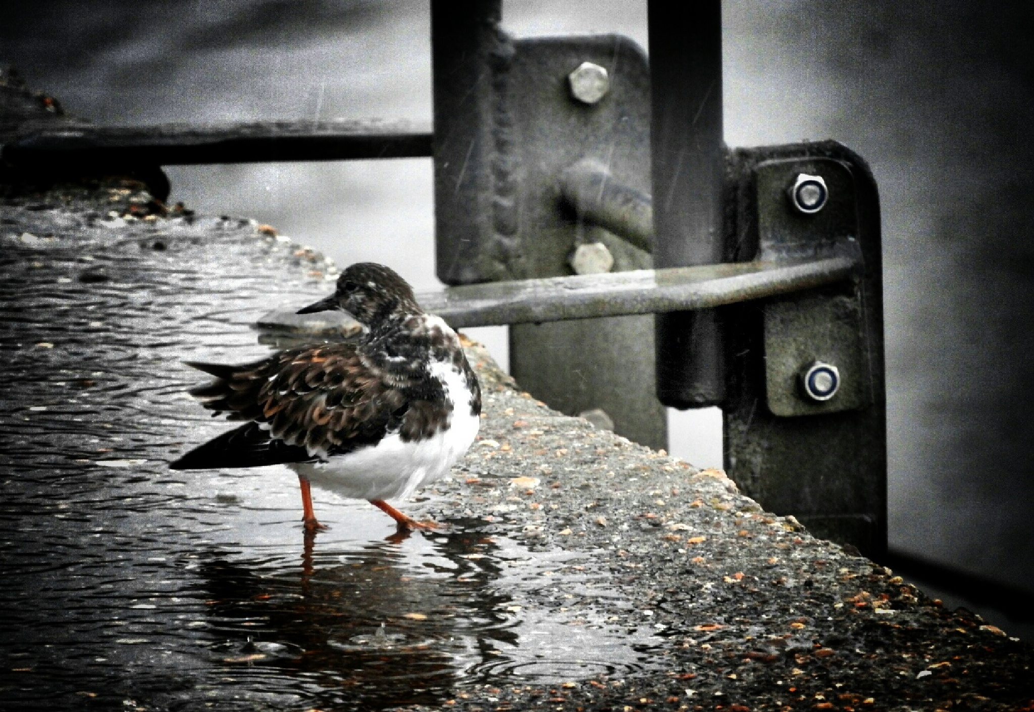 I'm singing and I'm dancing, in the rain... by RobJames66