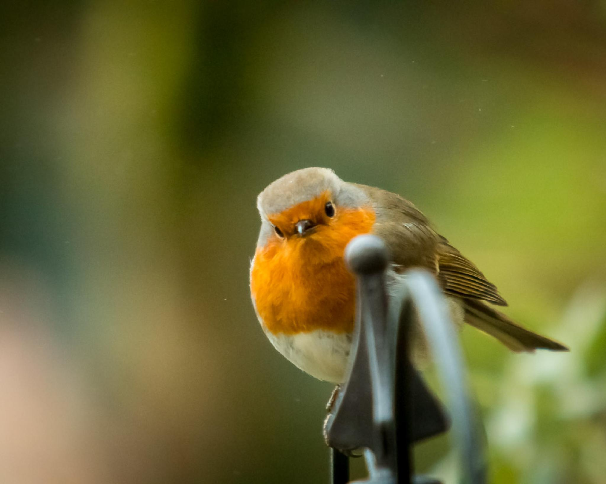 You Looking At Me?? by Jasonvaughanphotography
