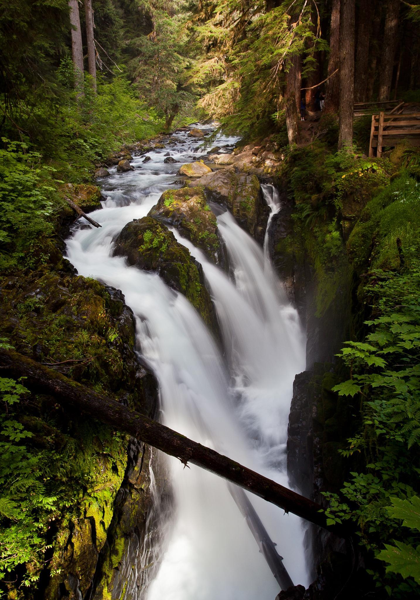 olympic national park sol duc falls by joe.pan