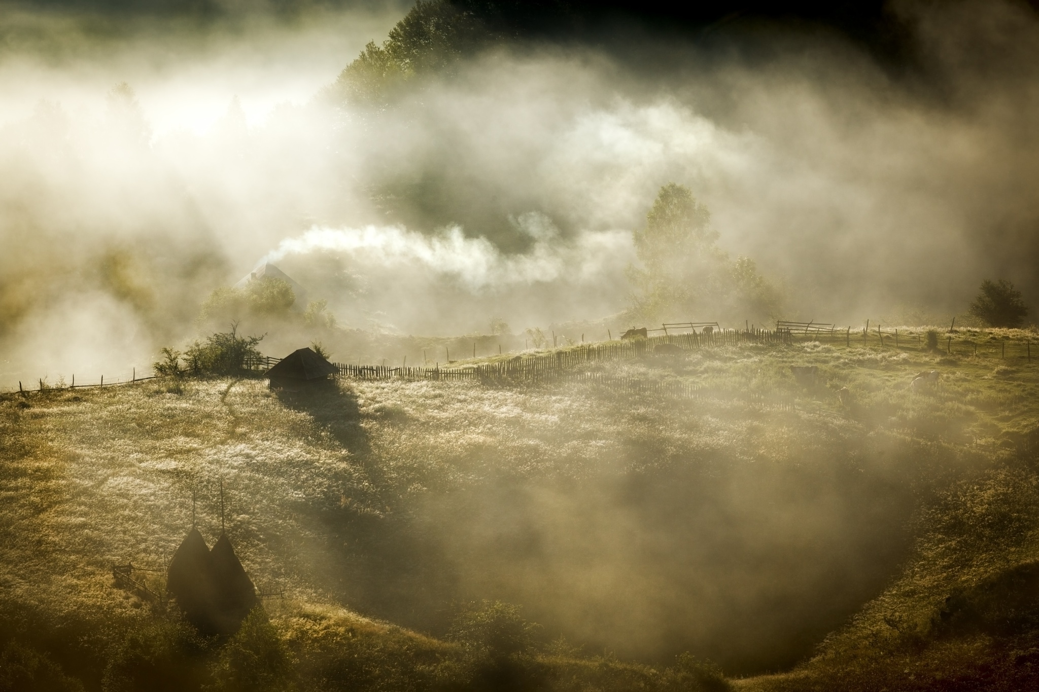 Misty morning by Hamos Gyozo
