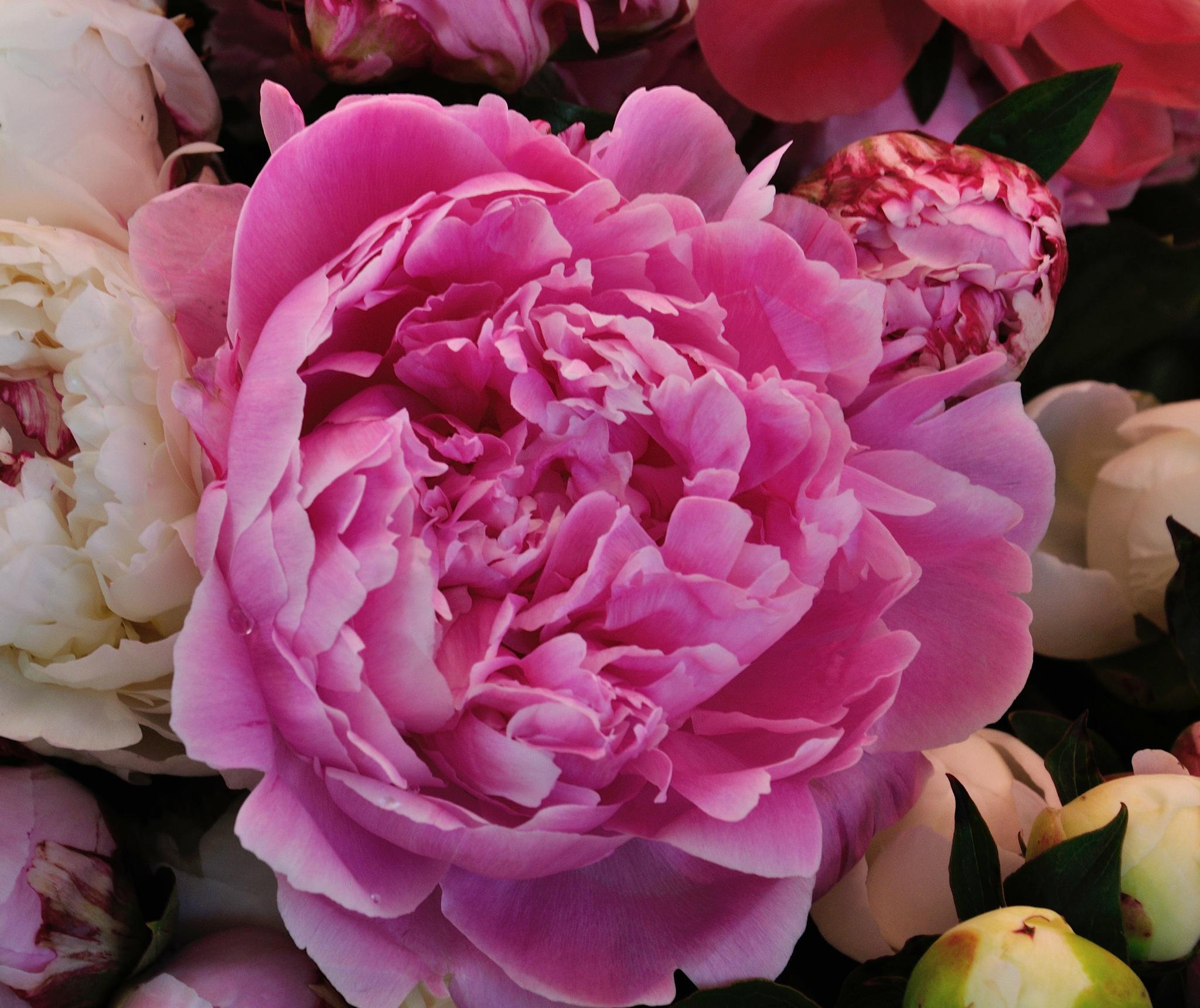 Flowers (55) by Derek Clarke