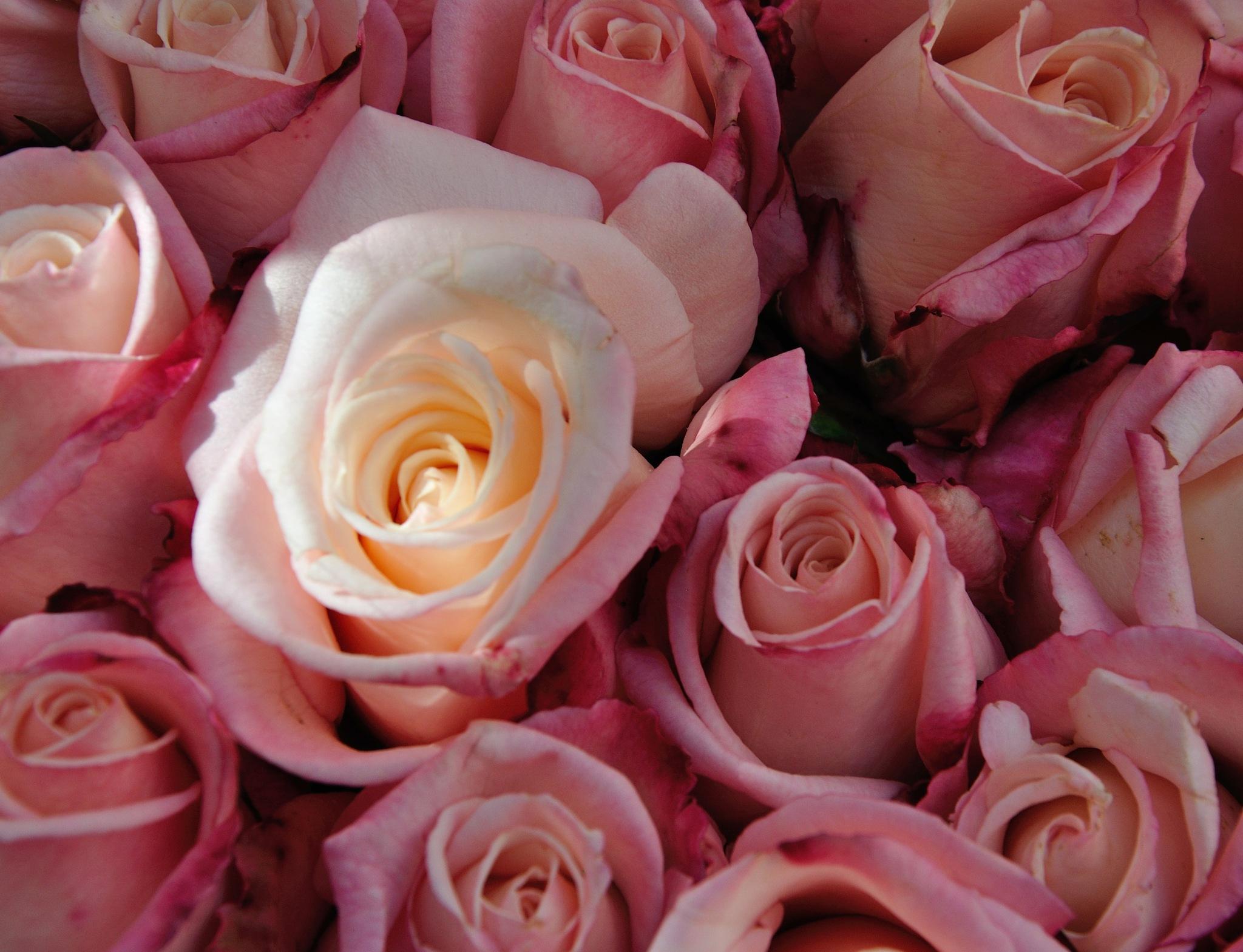 Flowers (58) by Derek Clarke