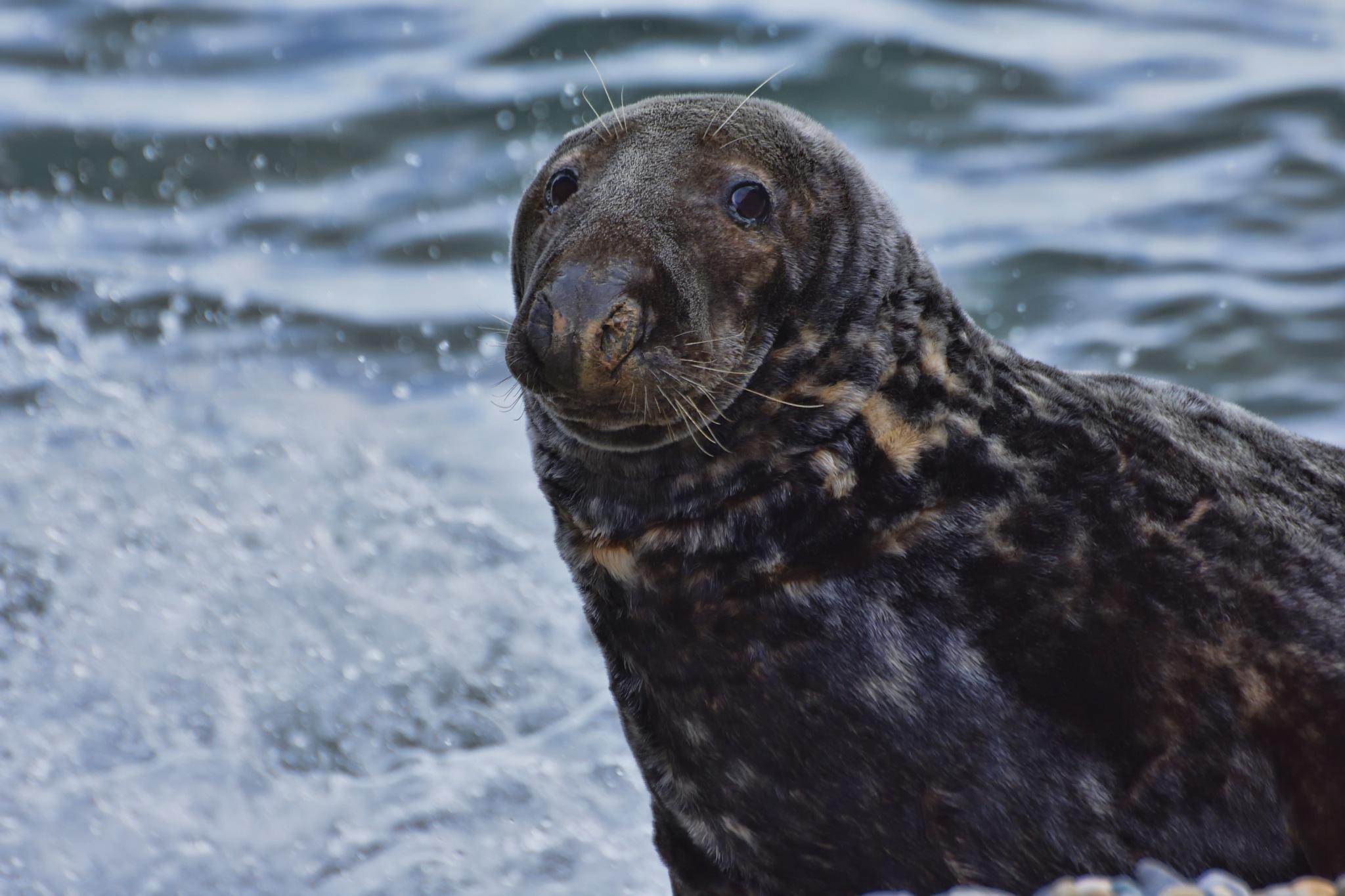 Wicklow Coast - Seals in the Cove by Derek Clarke