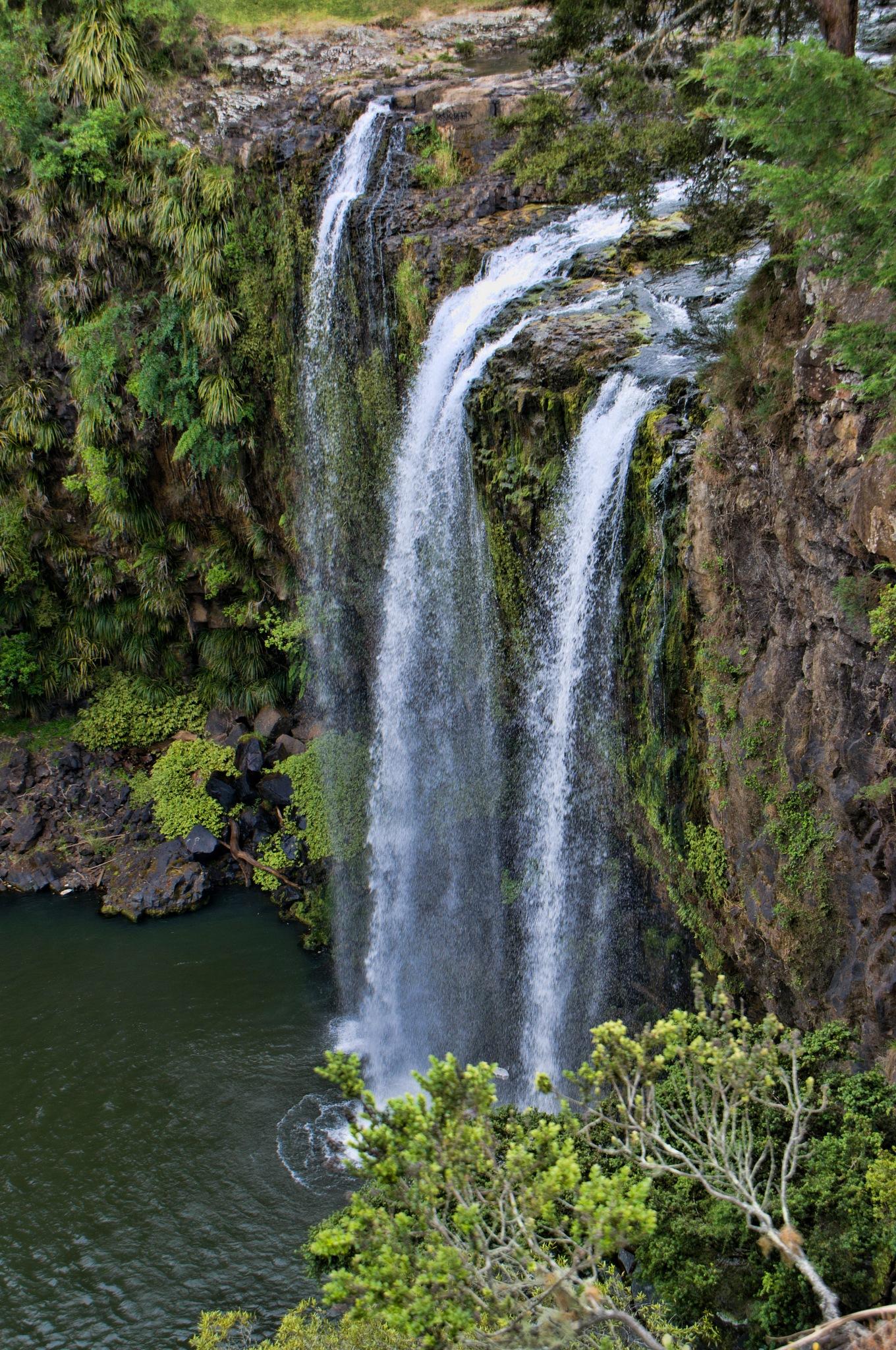 Scenic Whangarei Falls by Derek Clarke