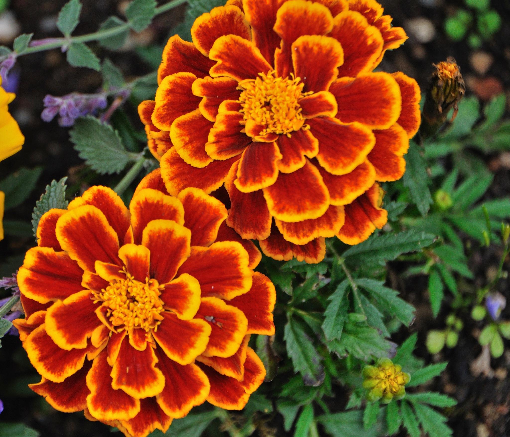 Flowers (27) by Derek Clarke