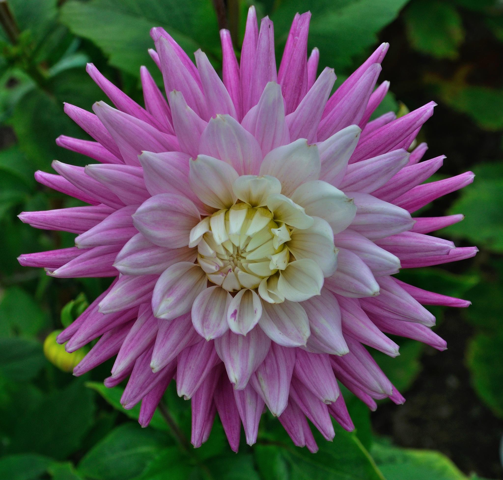 Flowers (25) by Derek Clarke