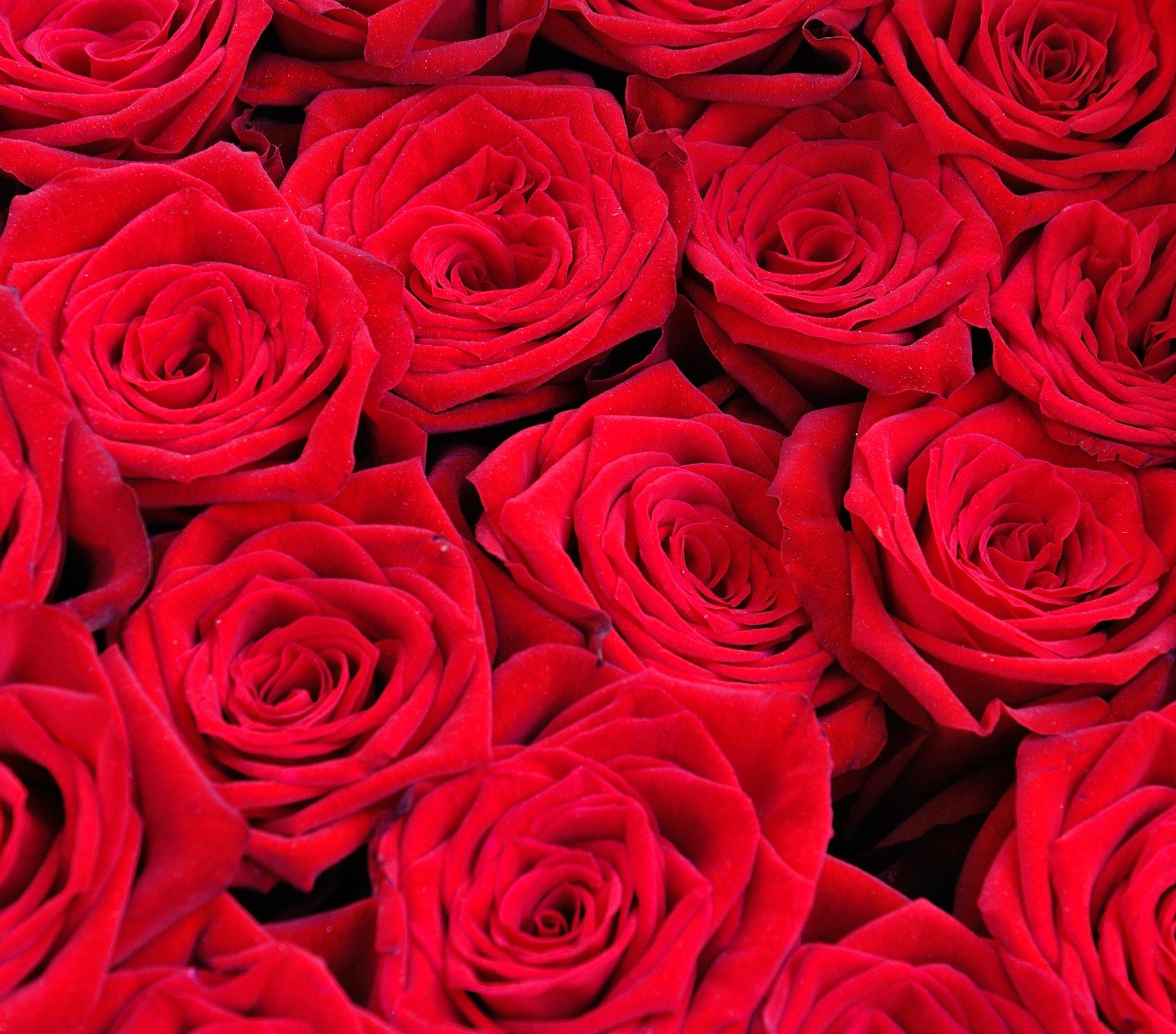 Flowers (59) by Derek Clarke