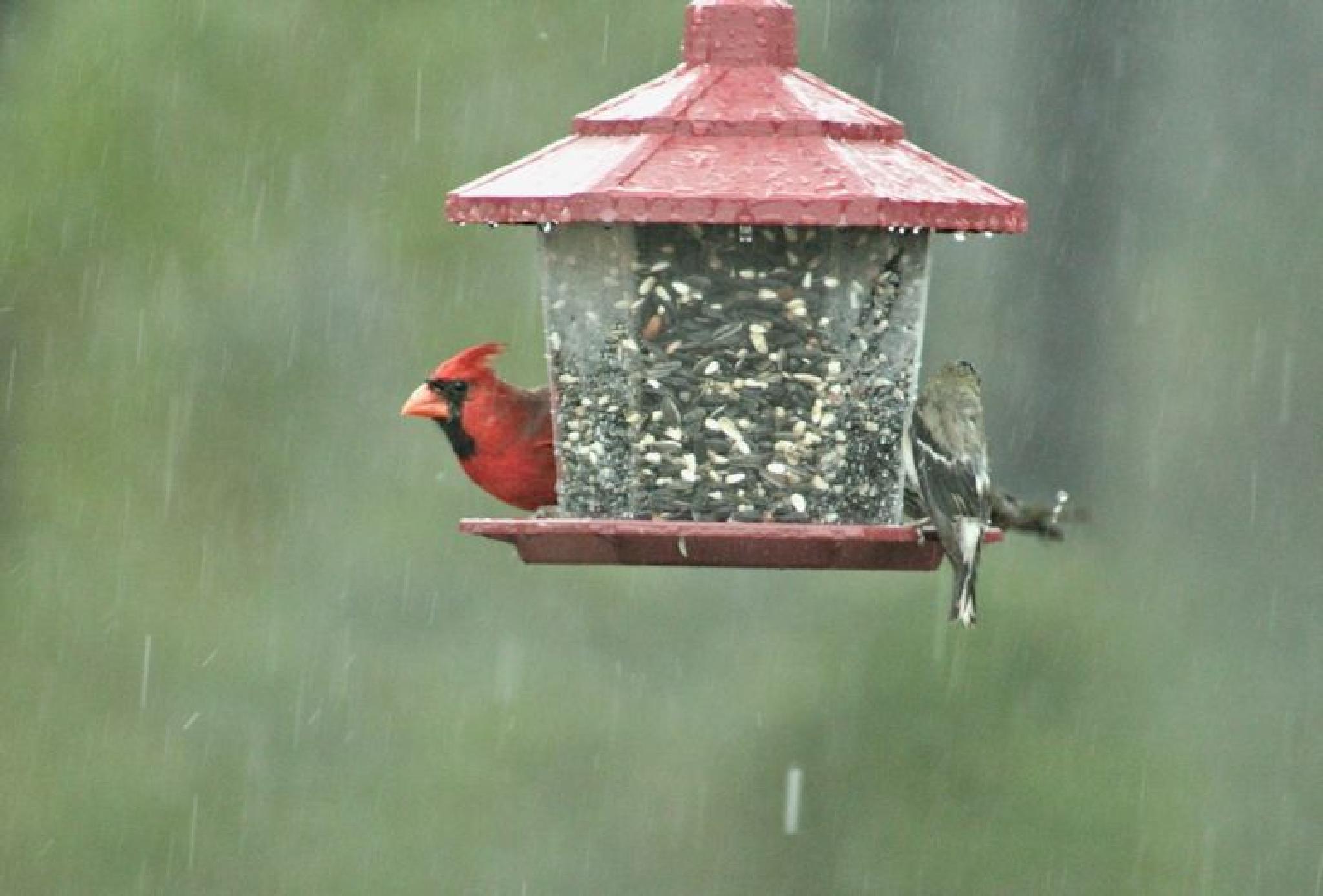 Its Raining by dubblybubbly51