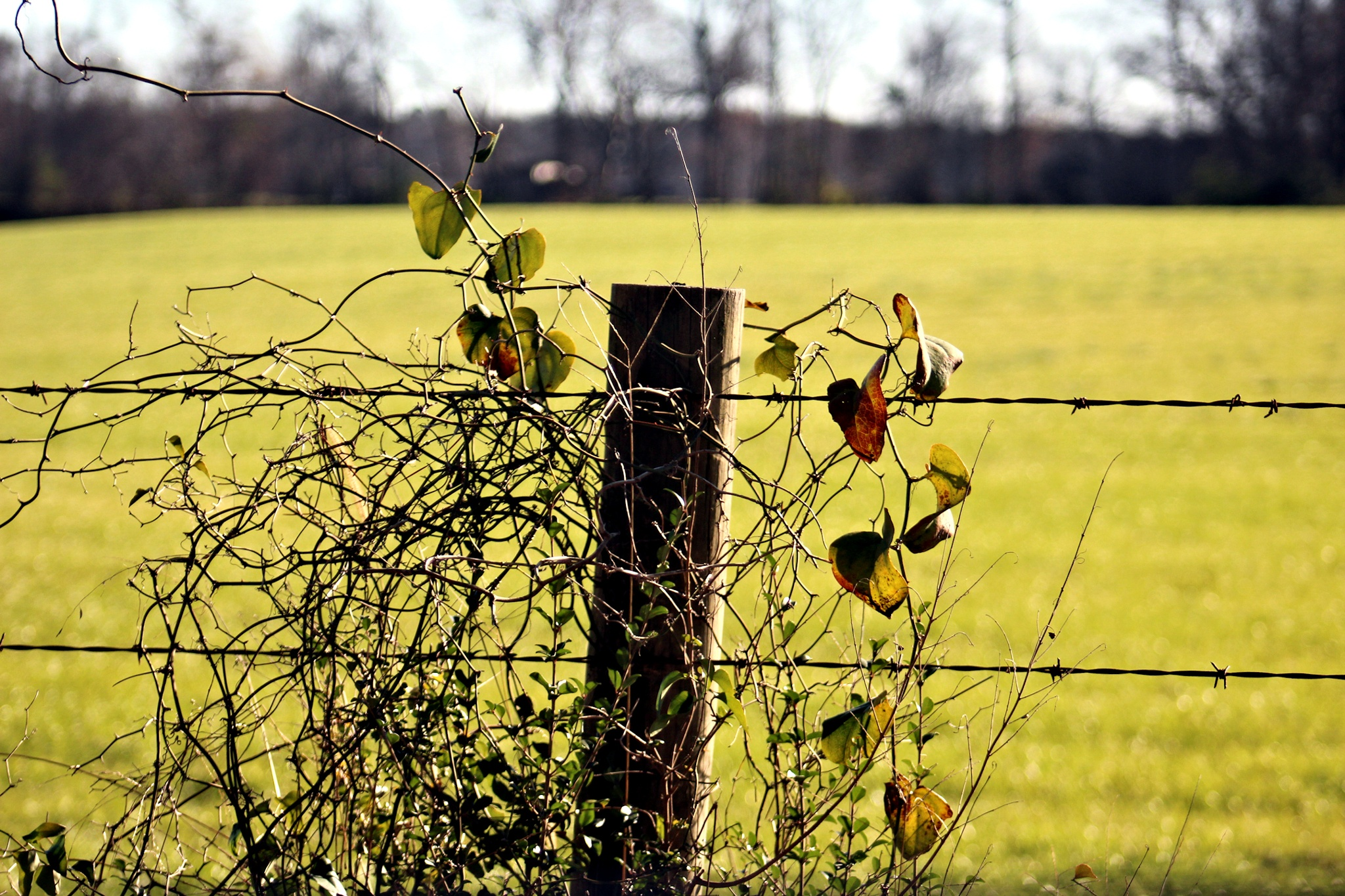 Fence Post and Barbed Wire by dubblybubbly51
