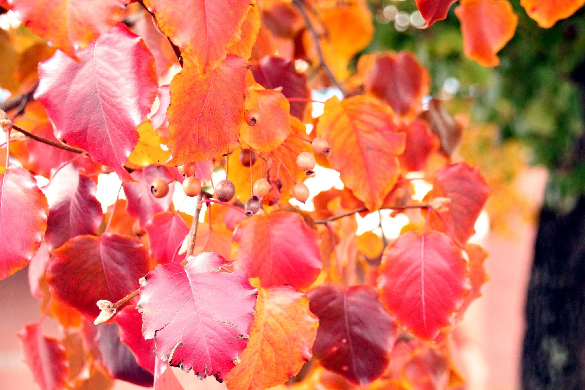 Fall Colors by dubblybubbly51