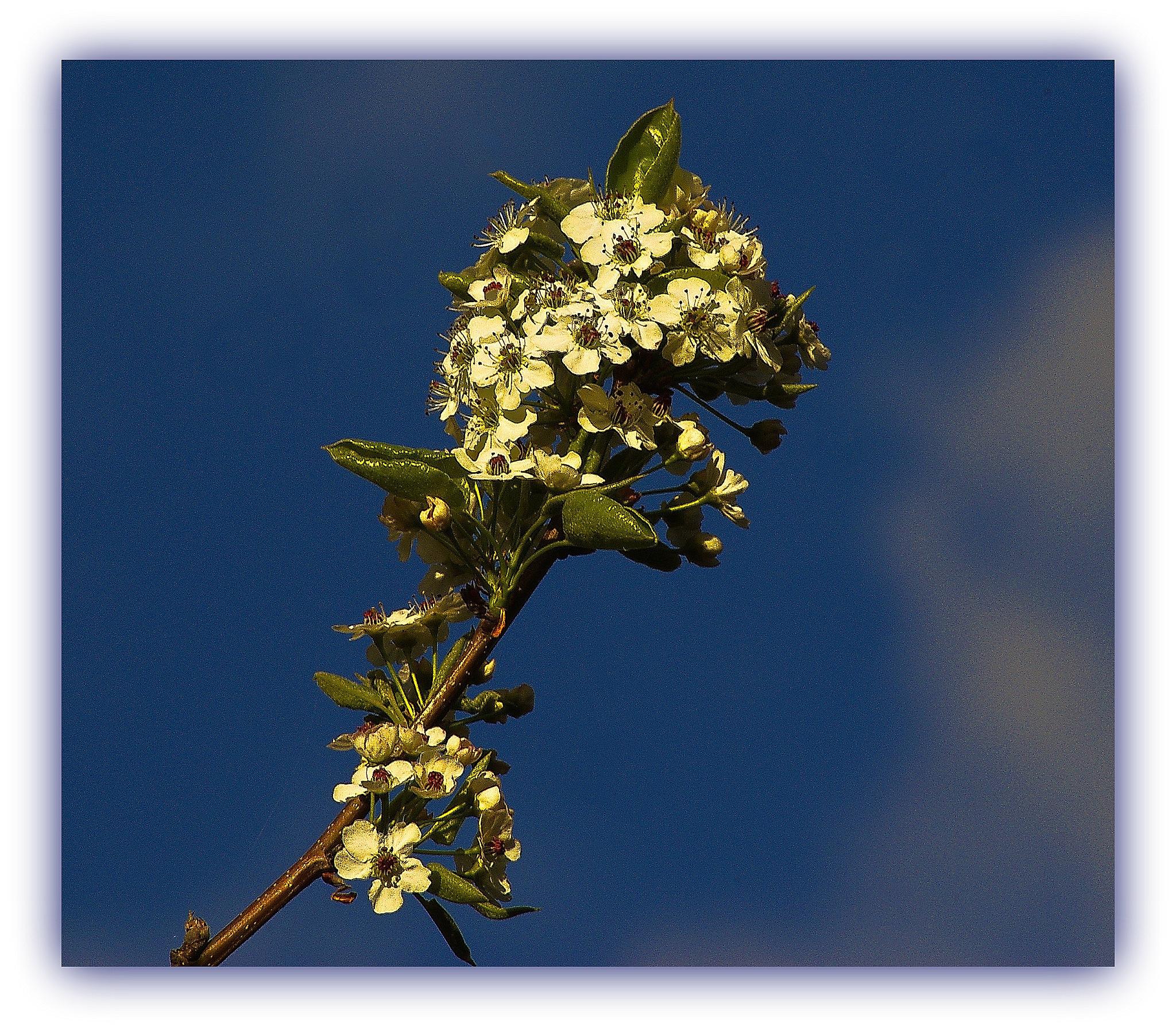 spring shot.. by ragnes840