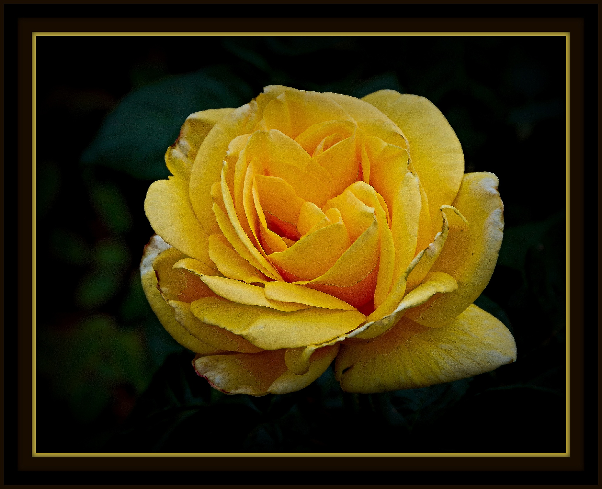 some of my roses..# 3 by ragnes840