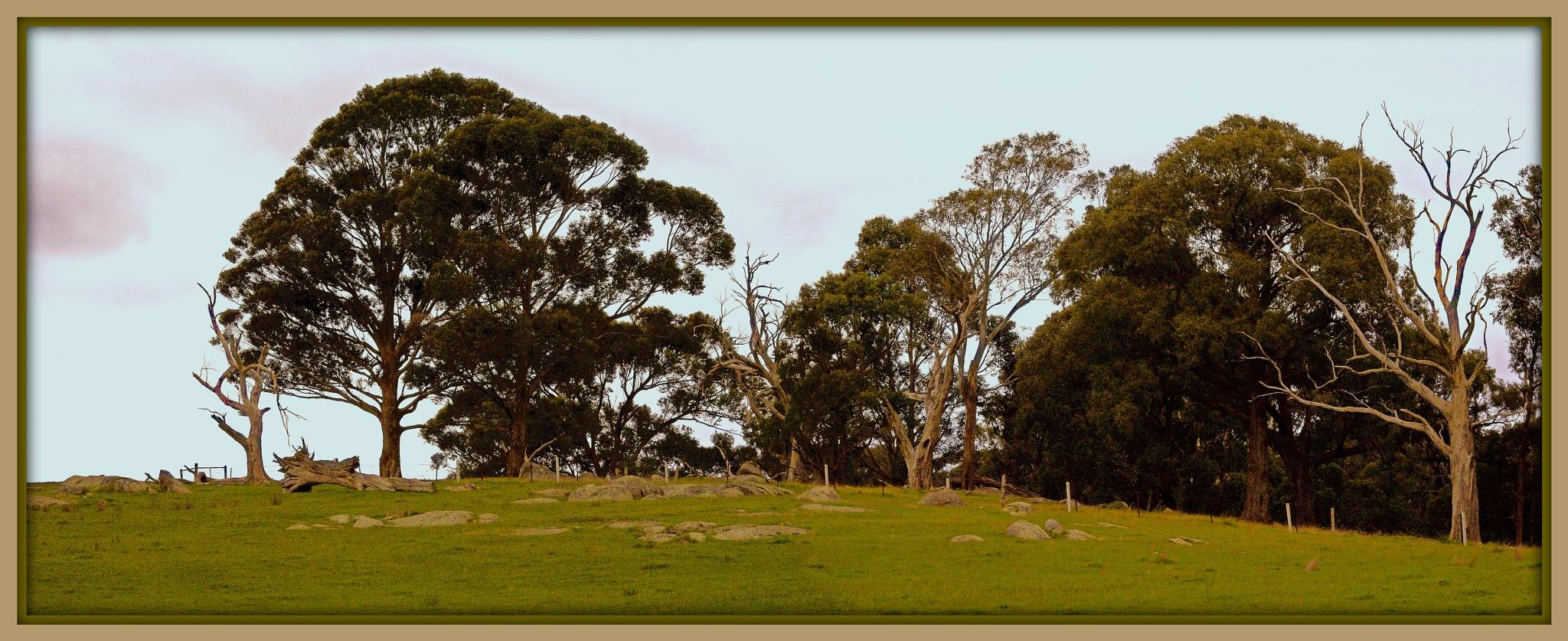 rural Australia.. by ragnes840