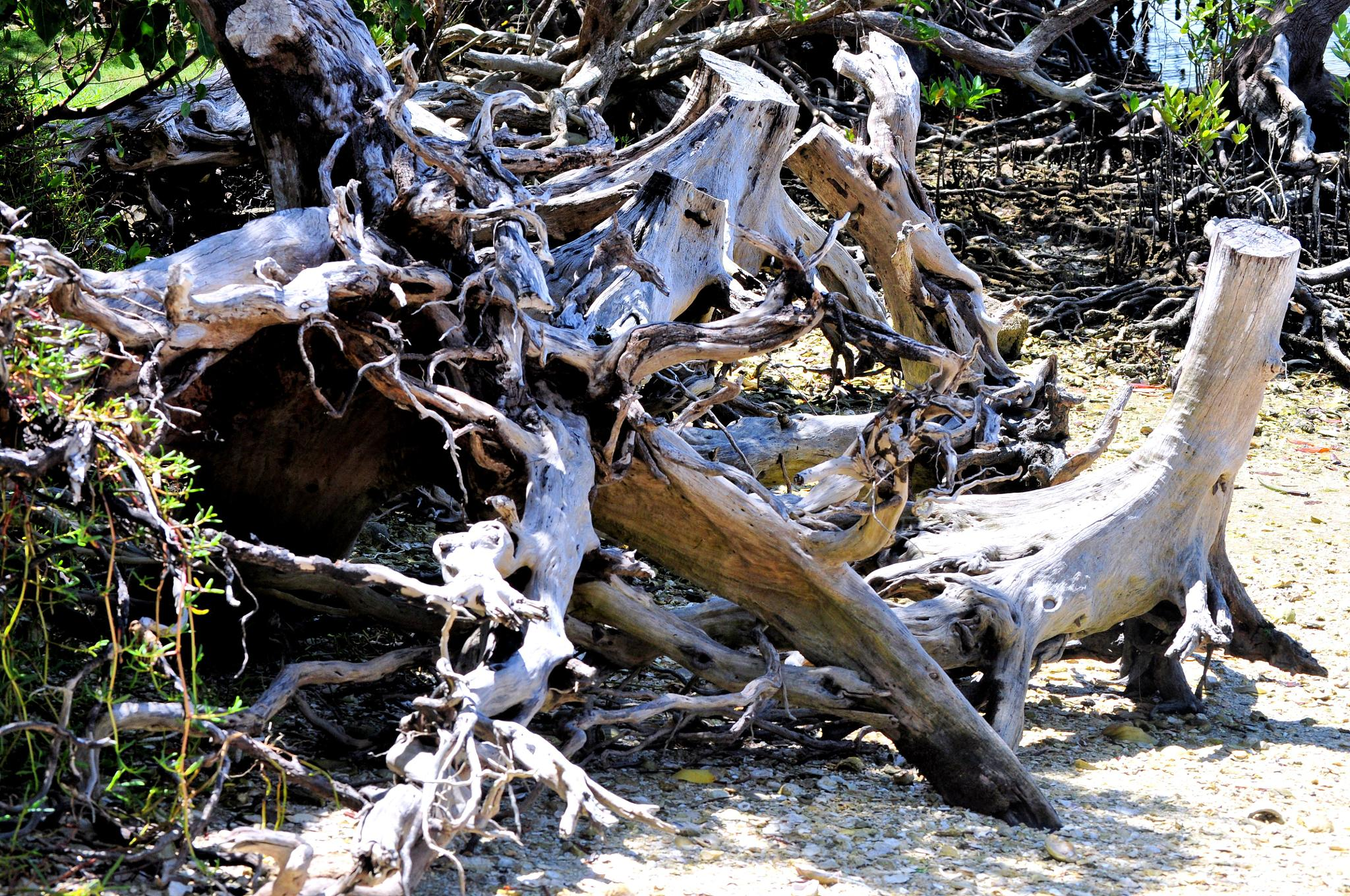 Driftwood by Storm1031