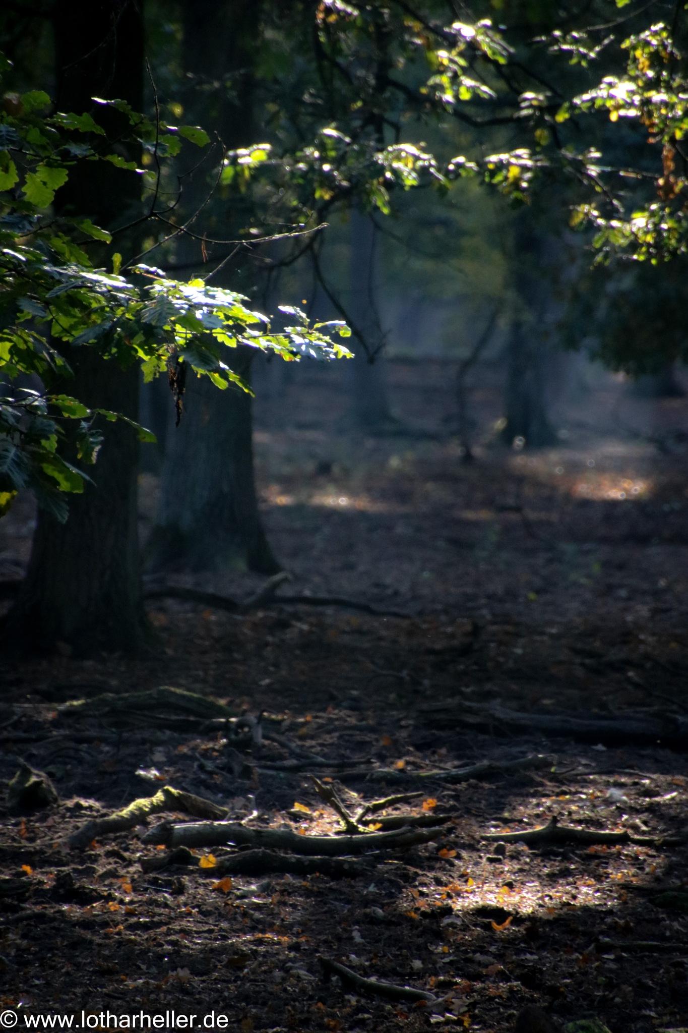 Forest Light by Lothar Heller