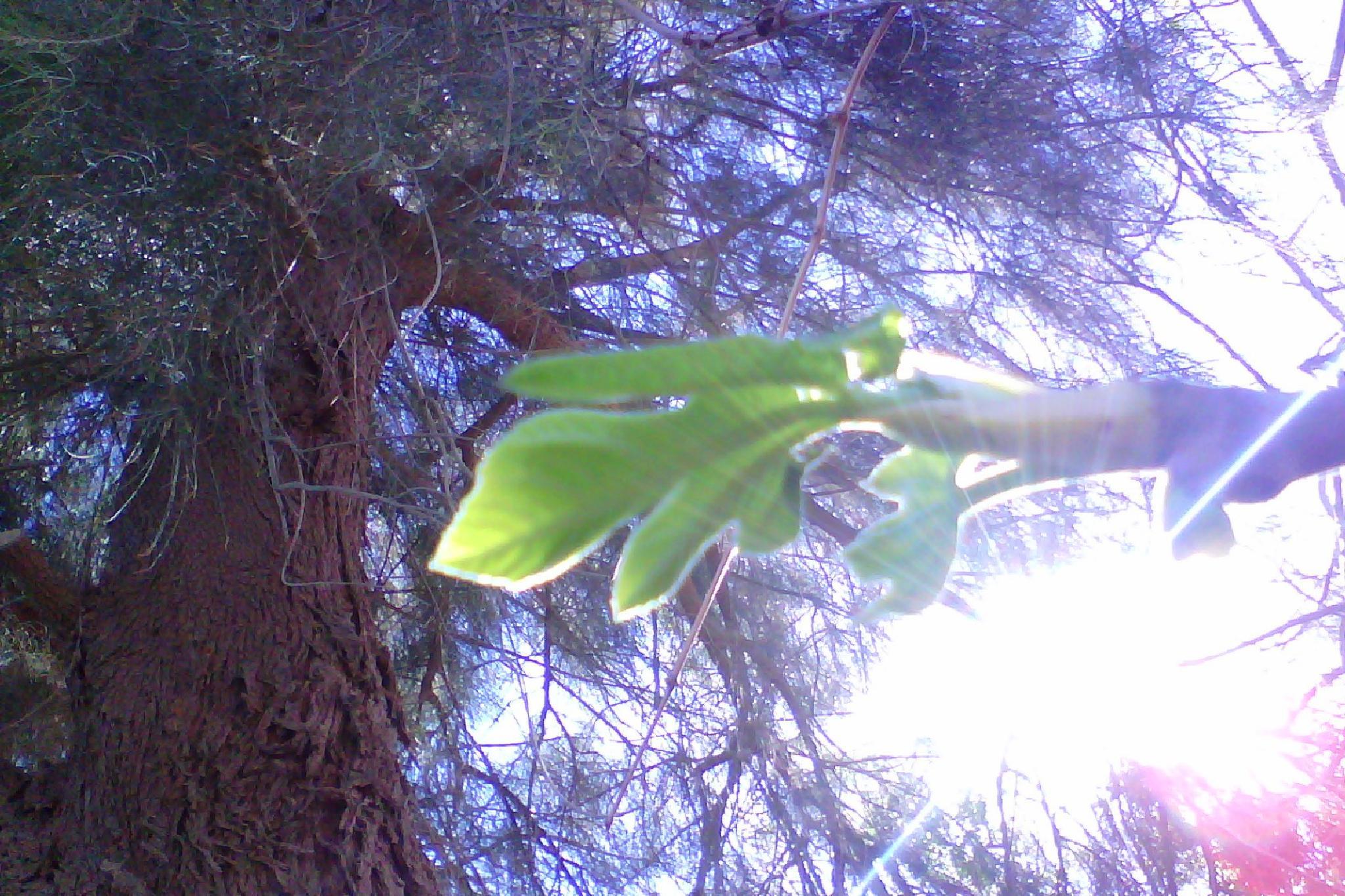 wanderfull natirol and sun by hocine.bernaoui