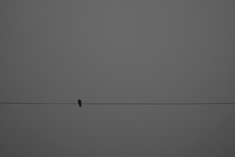 piccione by nevada749