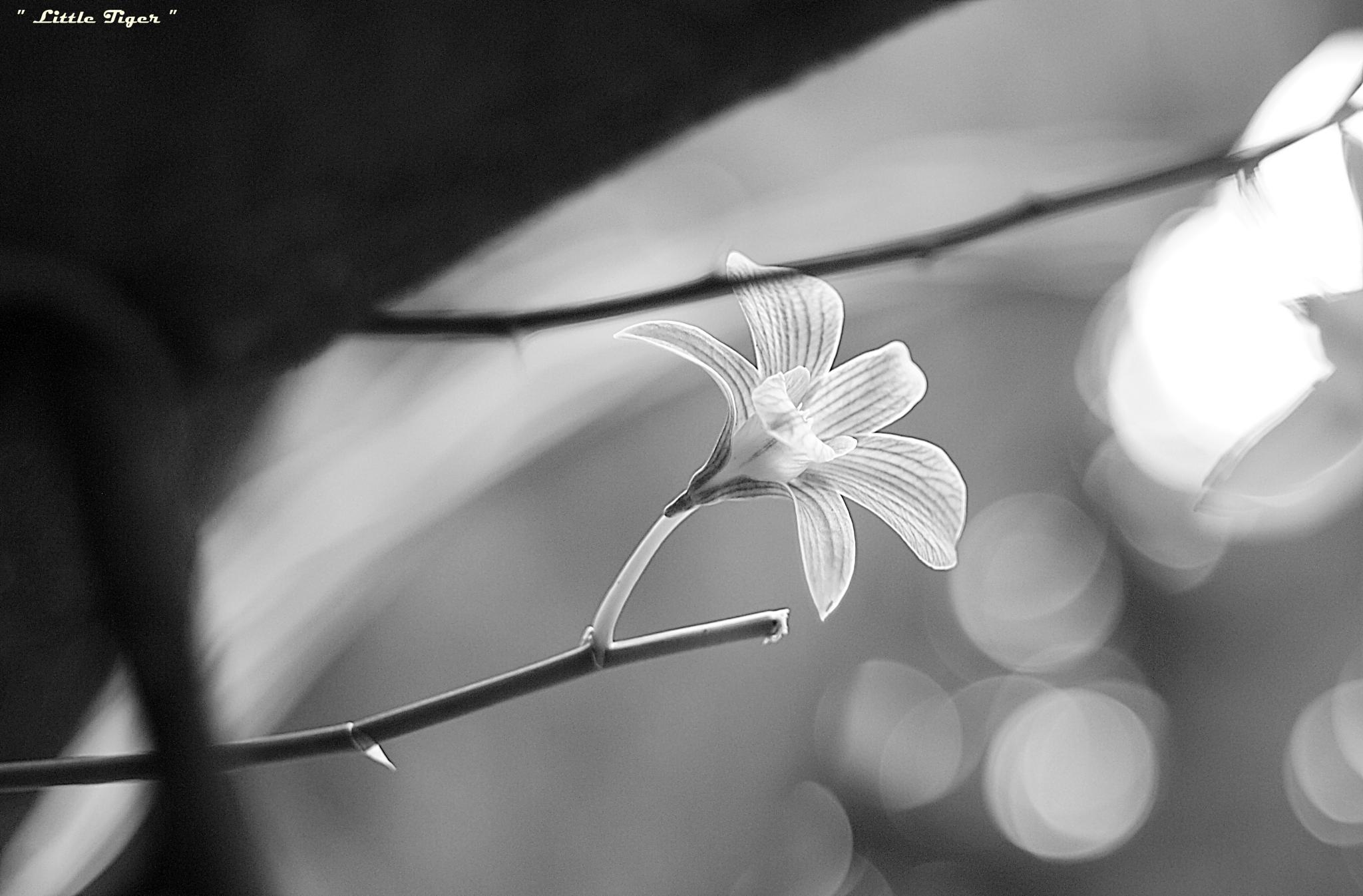 Monochrome orchid no.2 by PJ. Jakranuwat