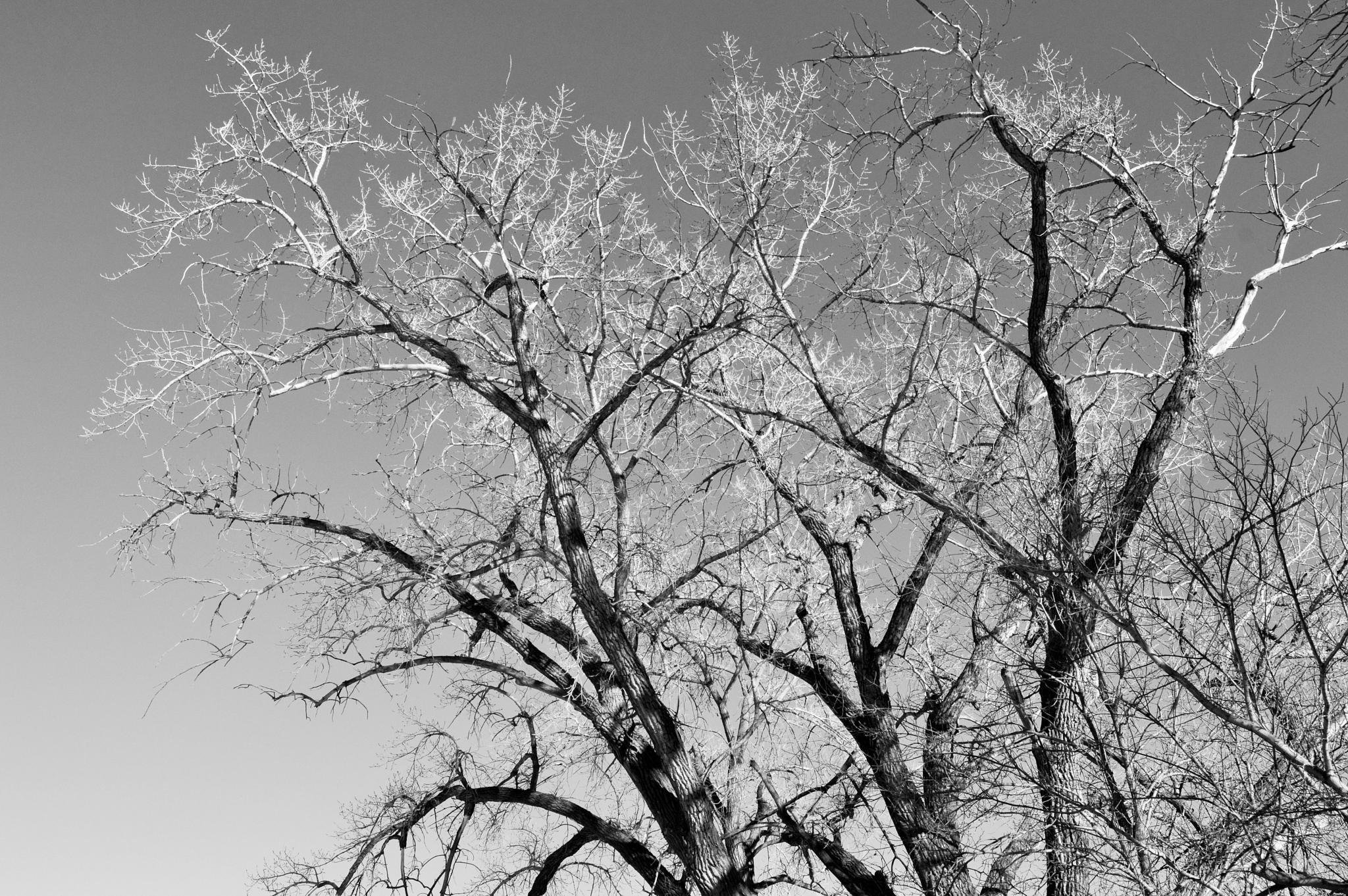 winter trees.. by michele.frank