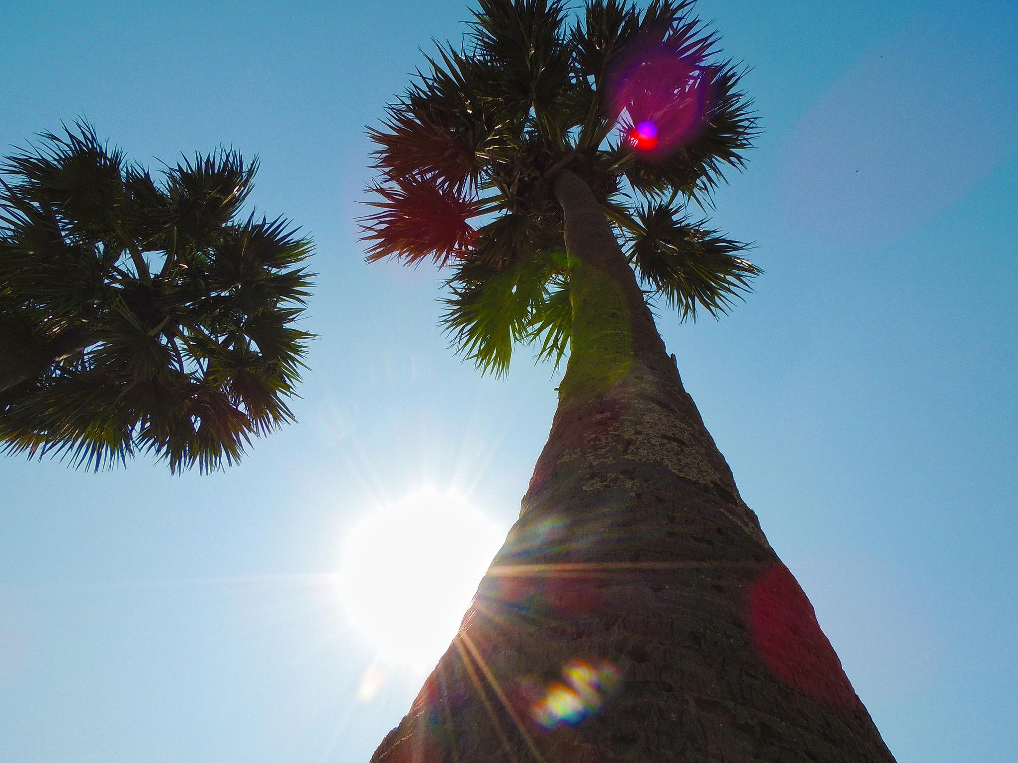 tree by Malay Karmakar