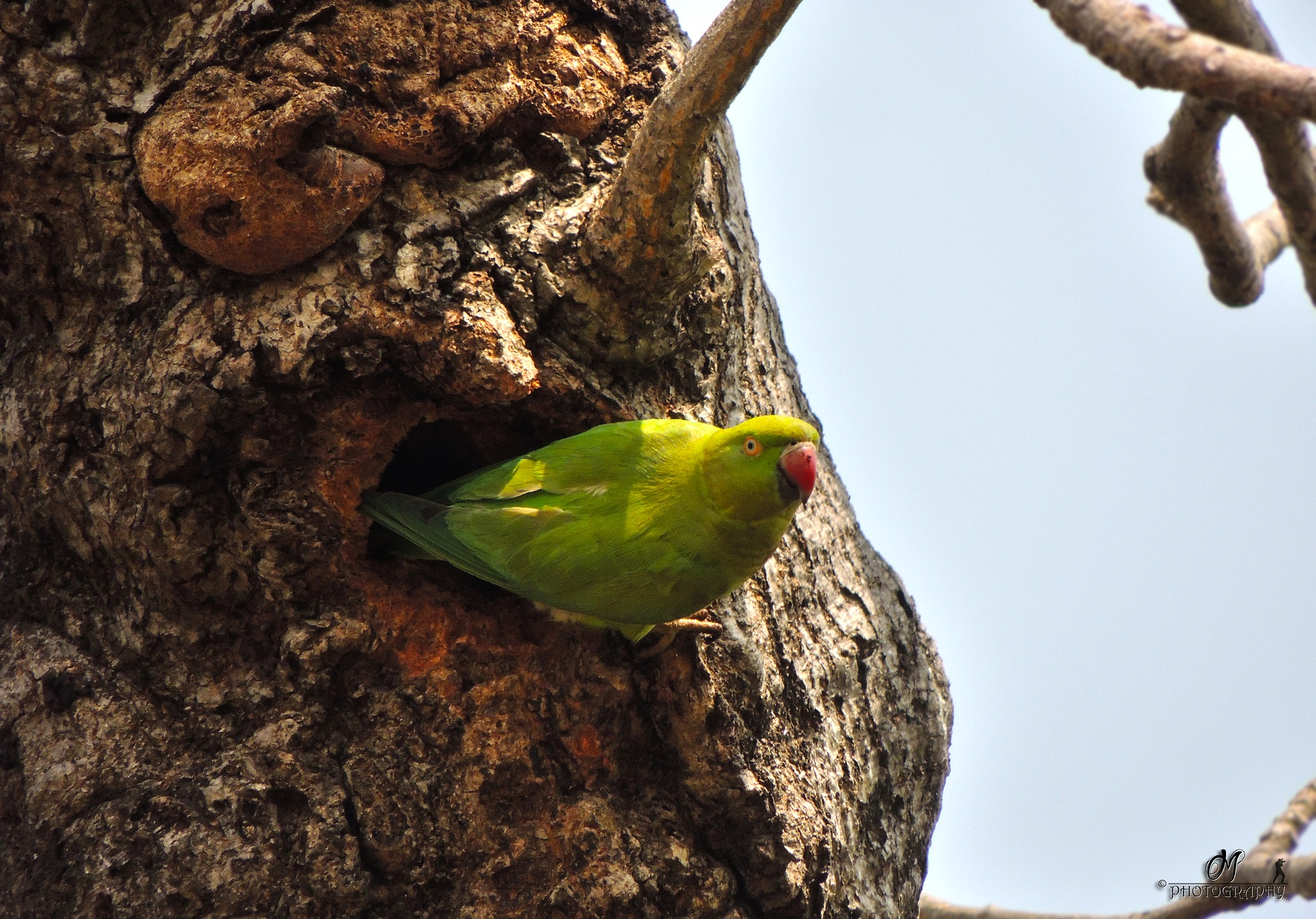 Parrot by Malay Karmakar
