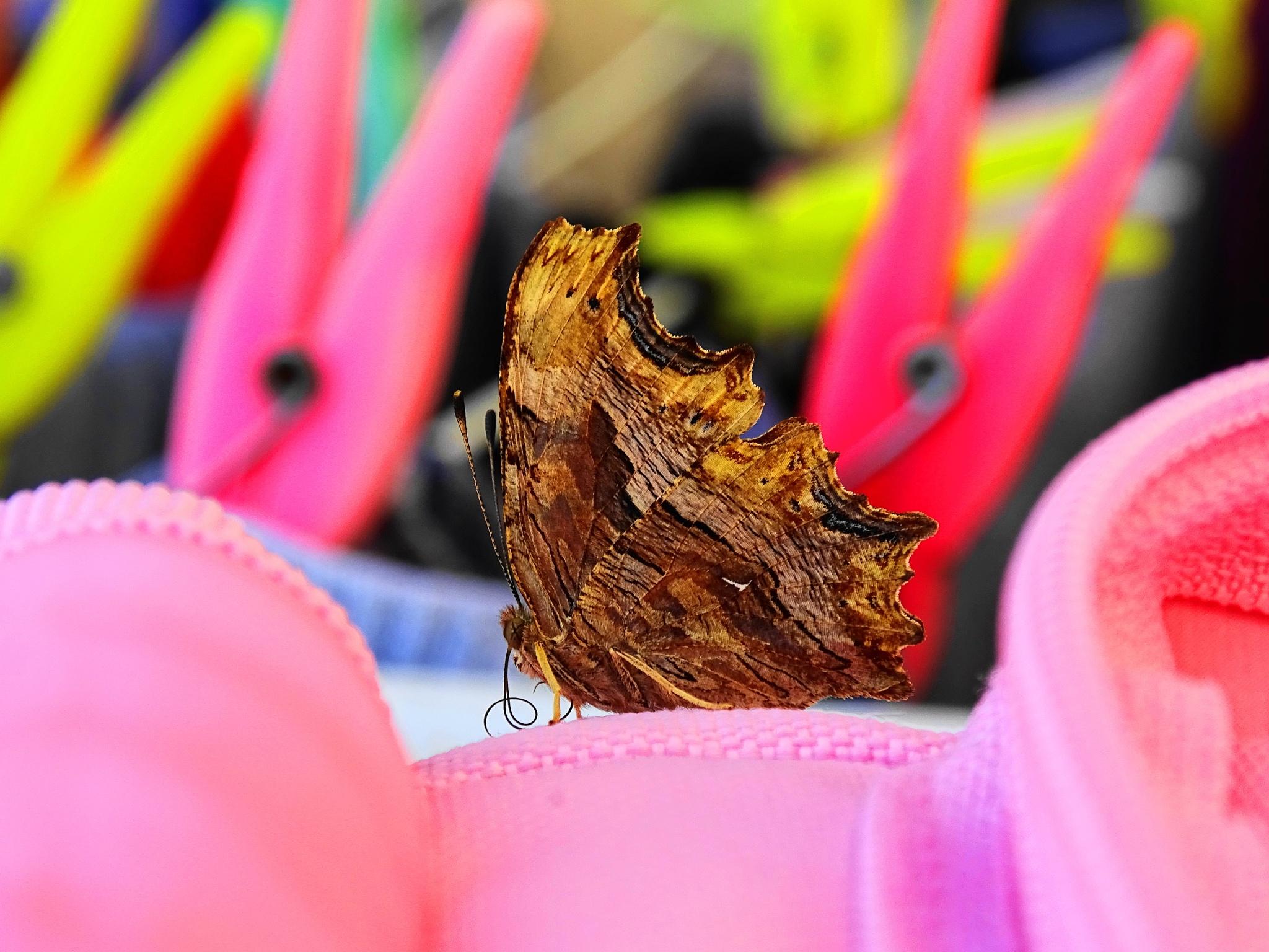 πεταλουδα by EL Greco