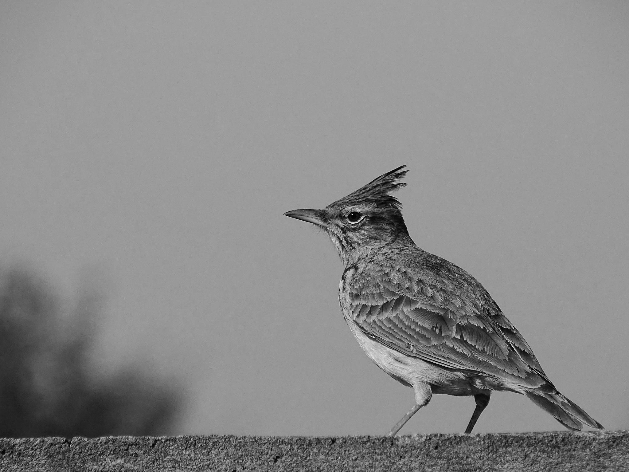 Bird by EL Greco