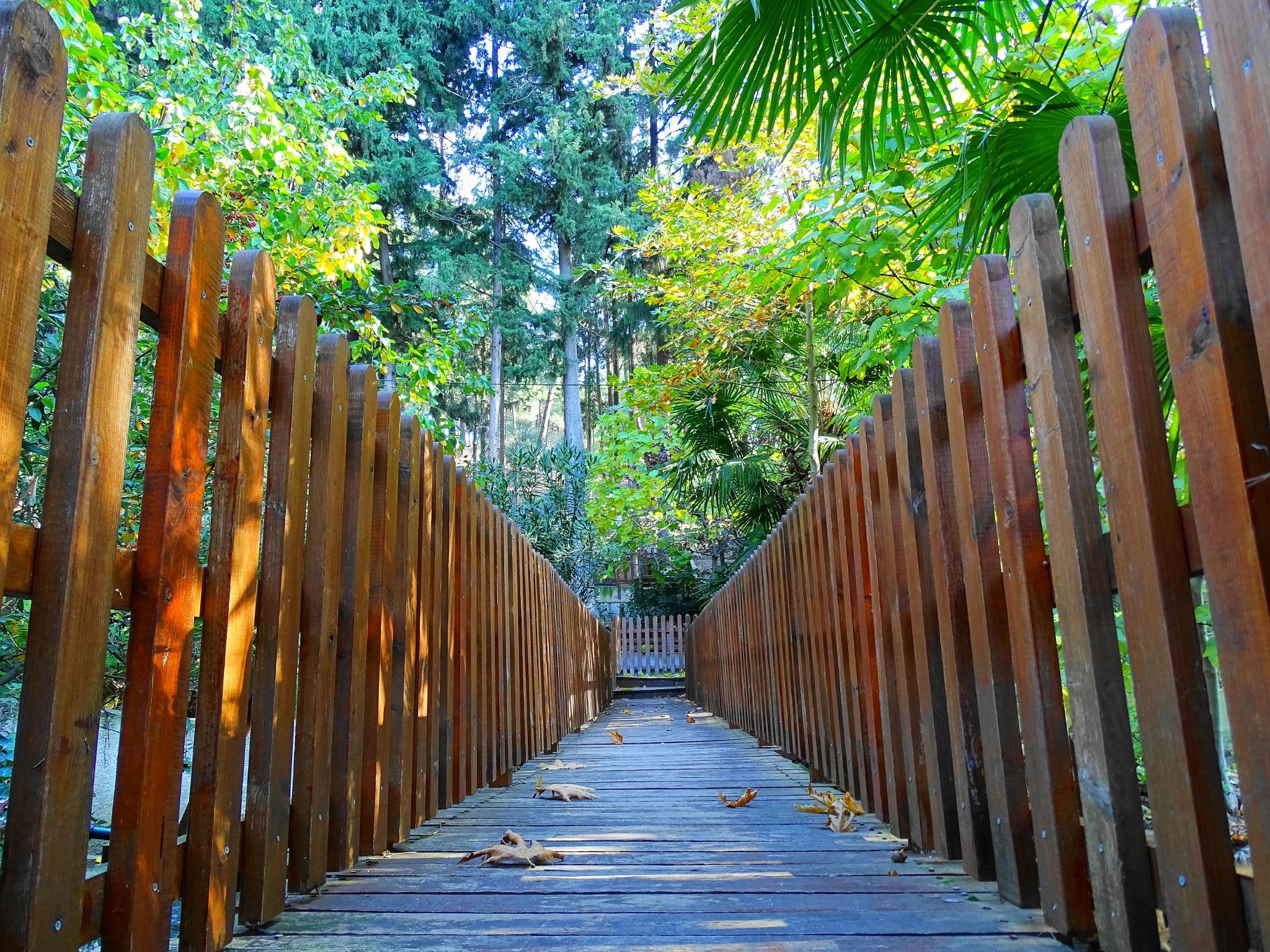 a bridge in the woods! by EL Greco