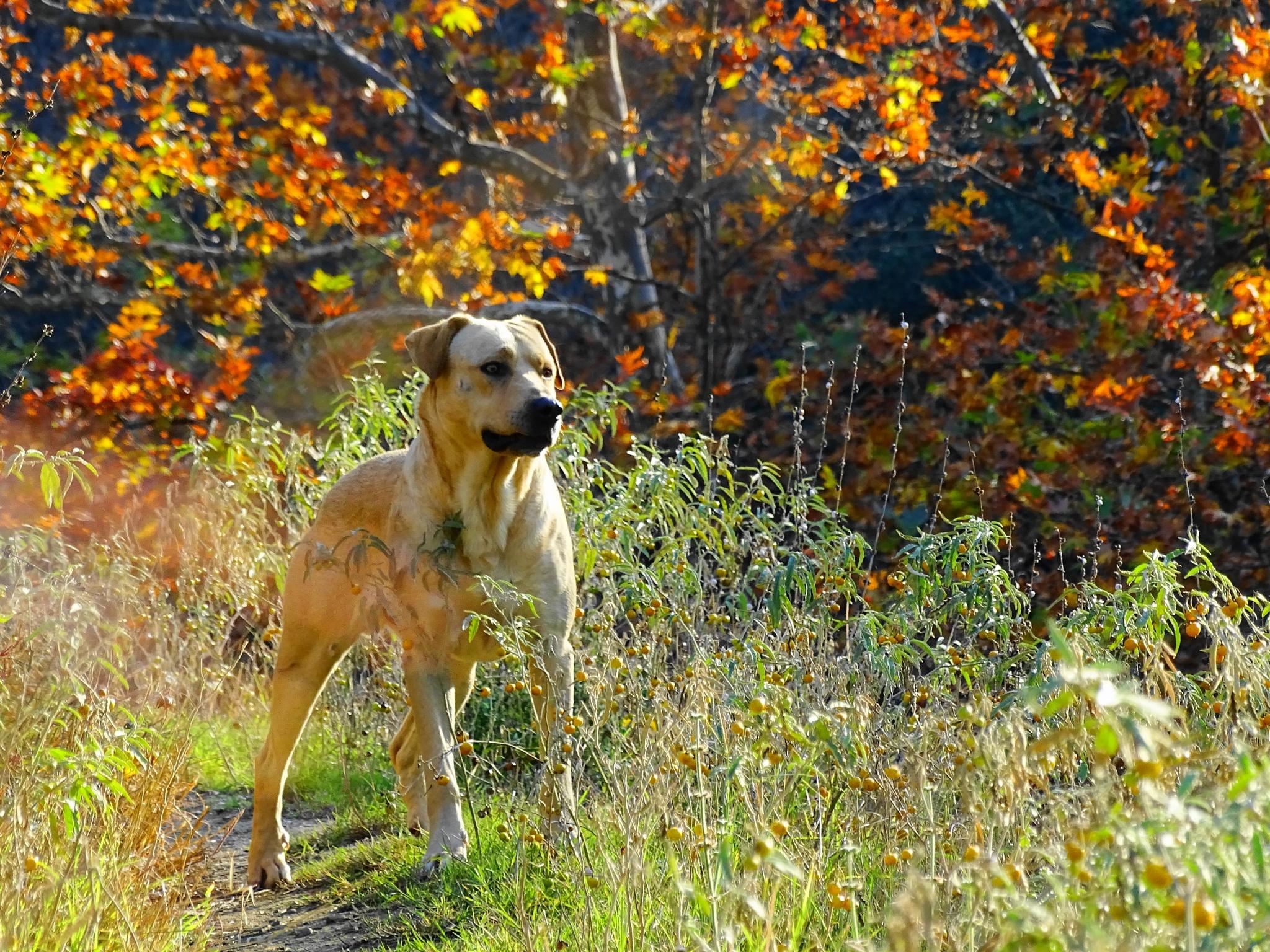 autumn! by EL Greco