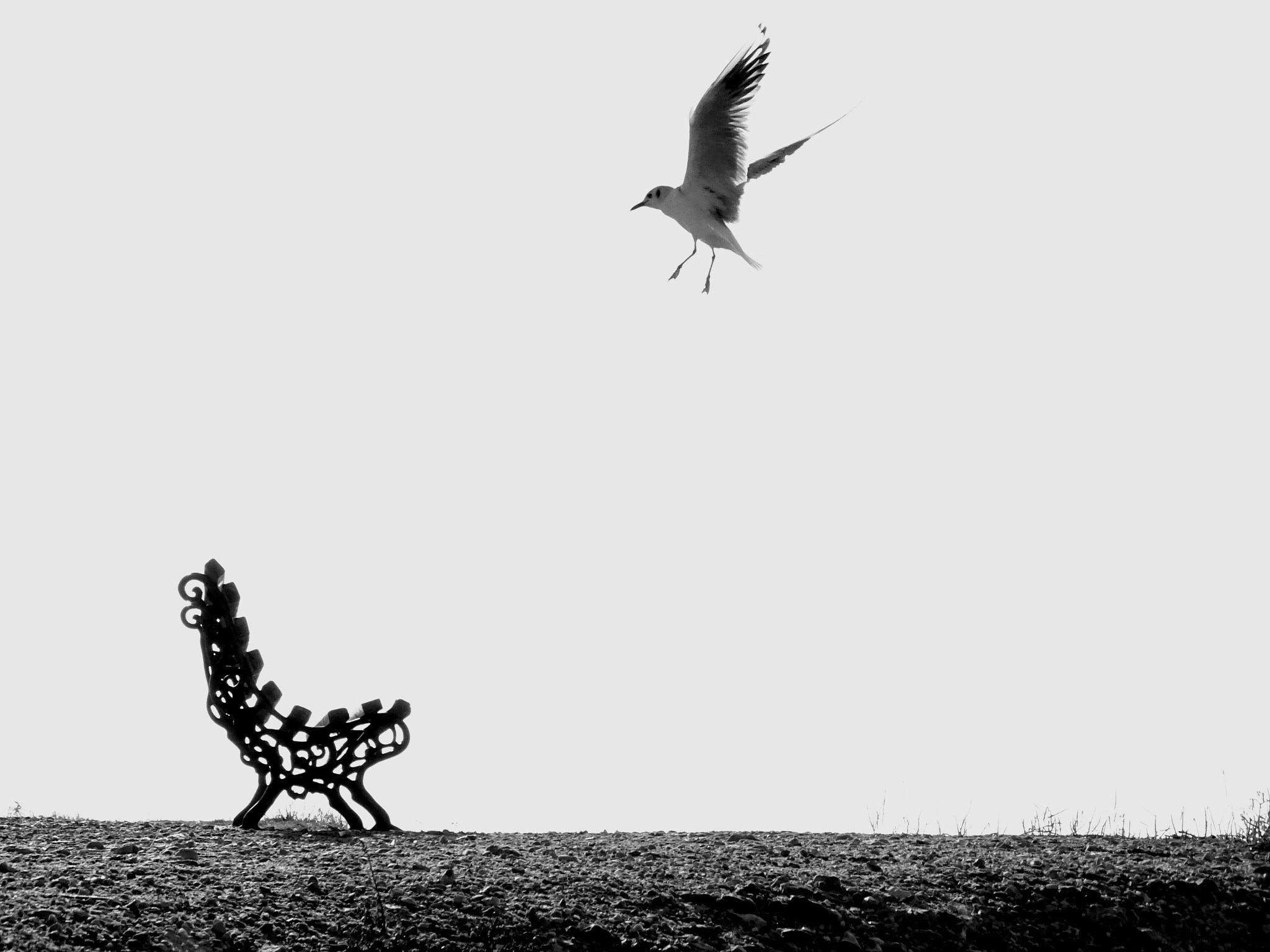 gull & bench by EL Greco