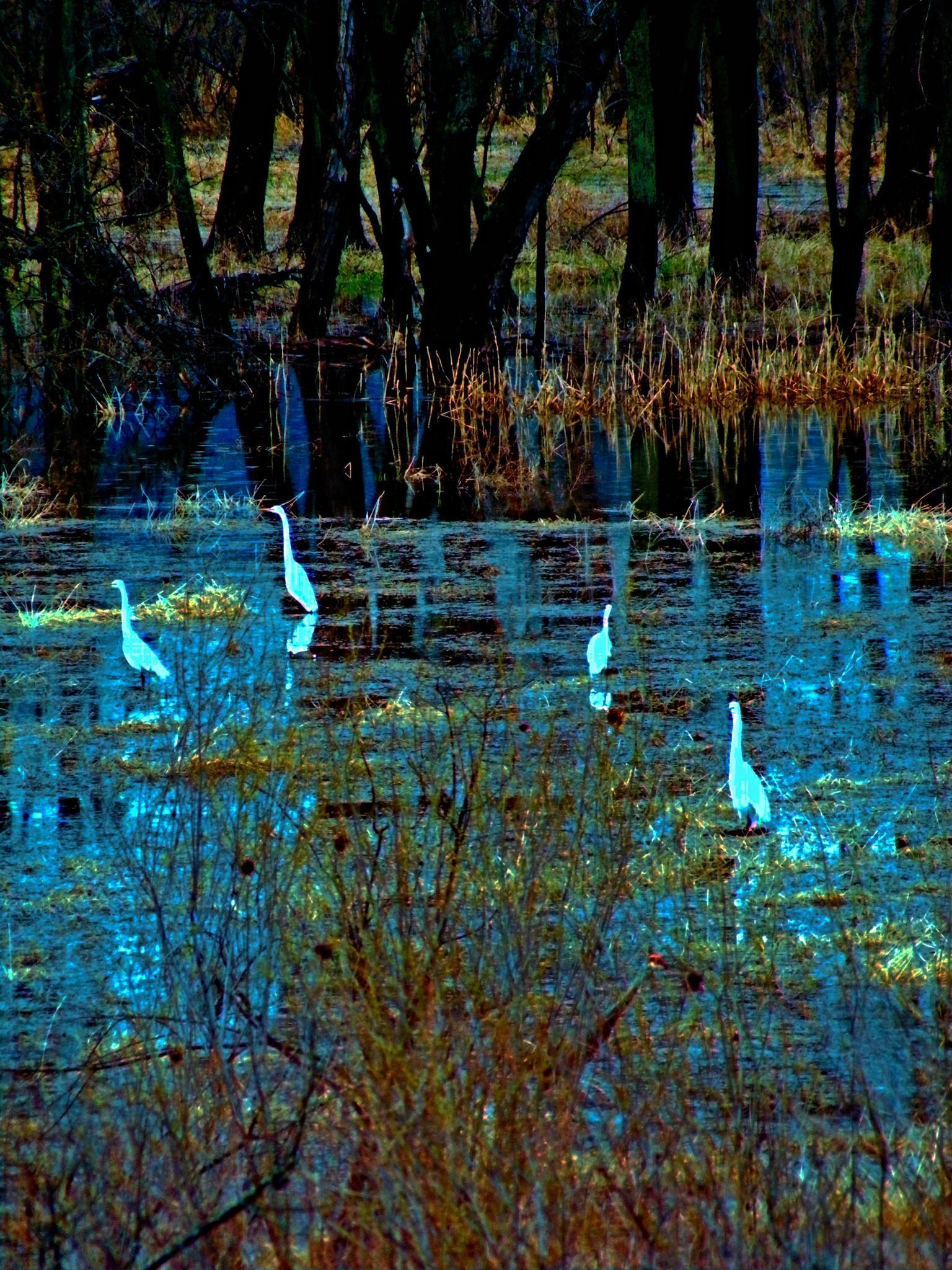 5 Cranes by Buffalo
