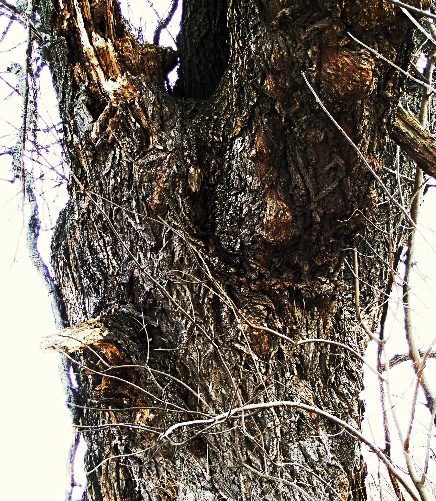 Tree by Buffalo