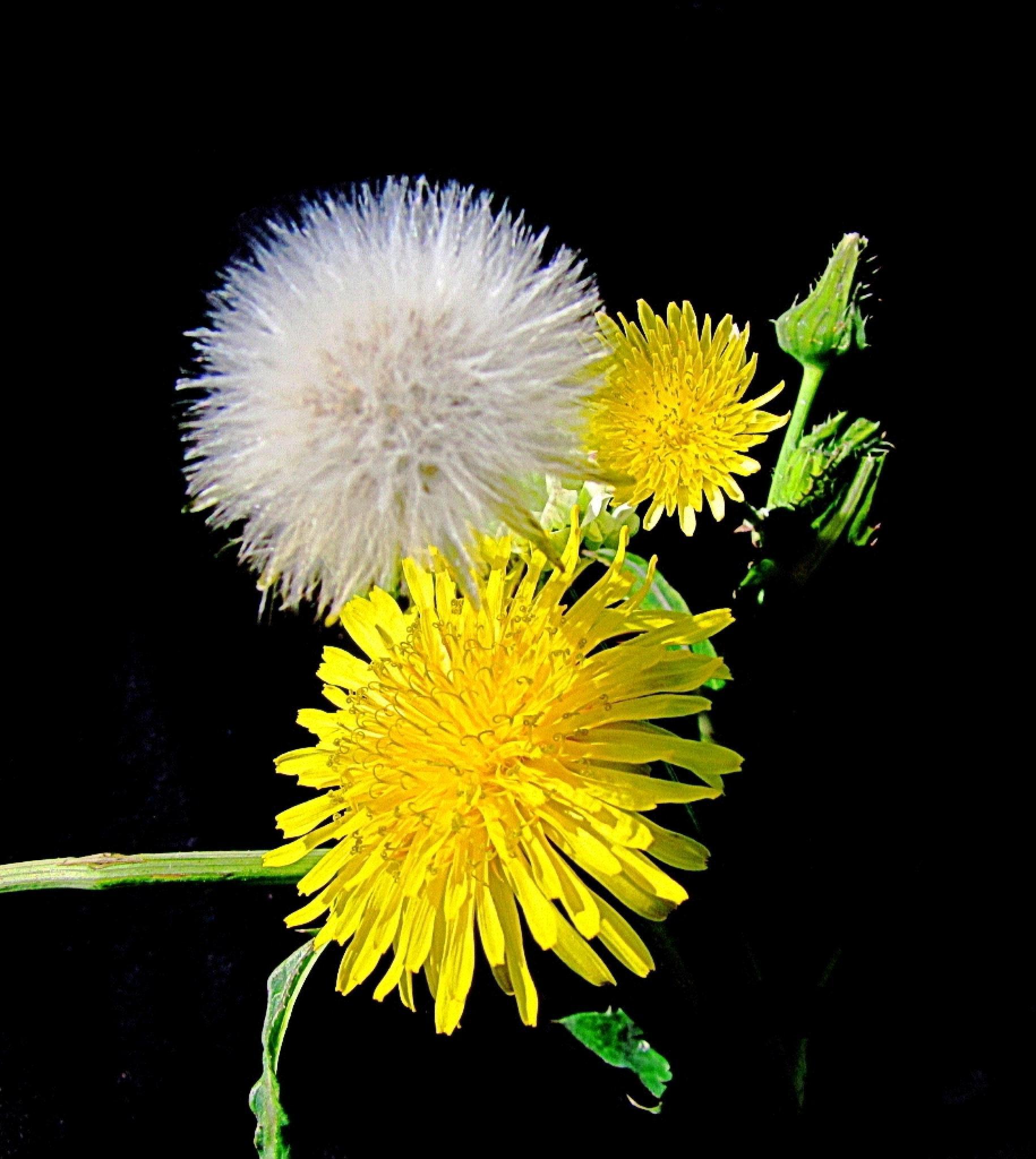 Flores Miniaturas !!!!! by alex.hp5211