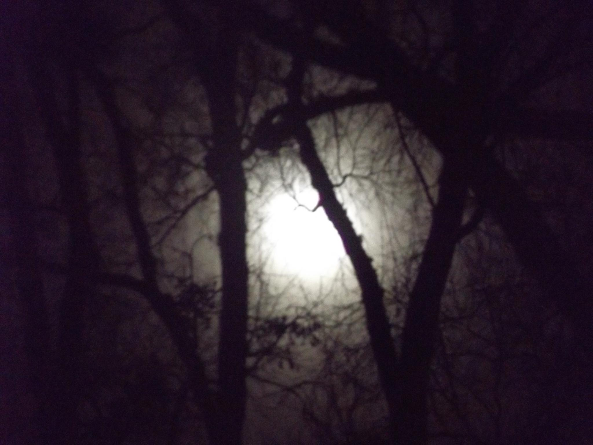Foggy moon by lisarobertsbell