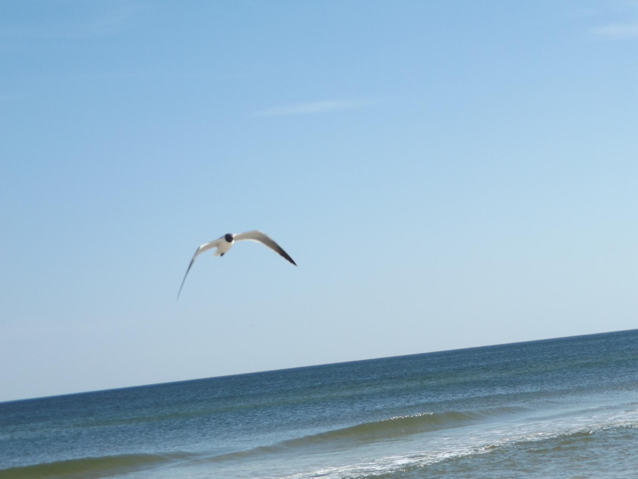 Orange Beach, Alabama by lisarobertsbell
