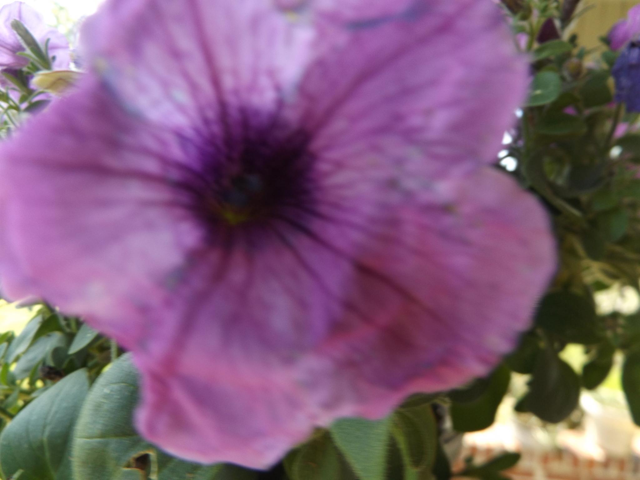 Sam's purple flower by lisarobertsbell