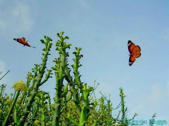 Morning activity  by Pravin Bagga