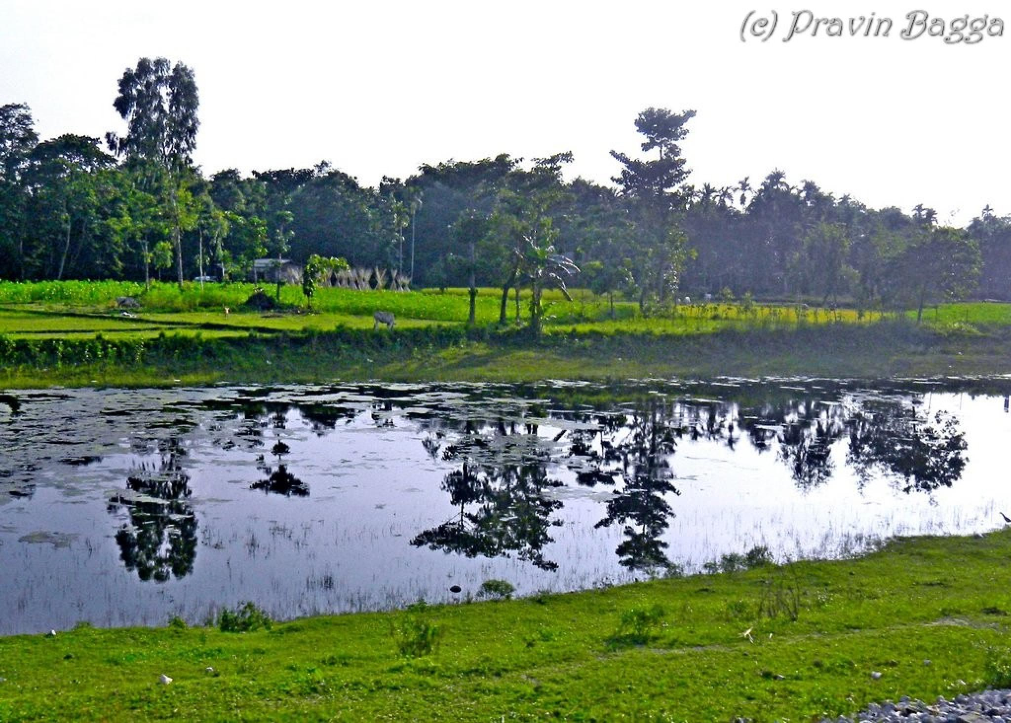 Reflection by Pravin Bagga